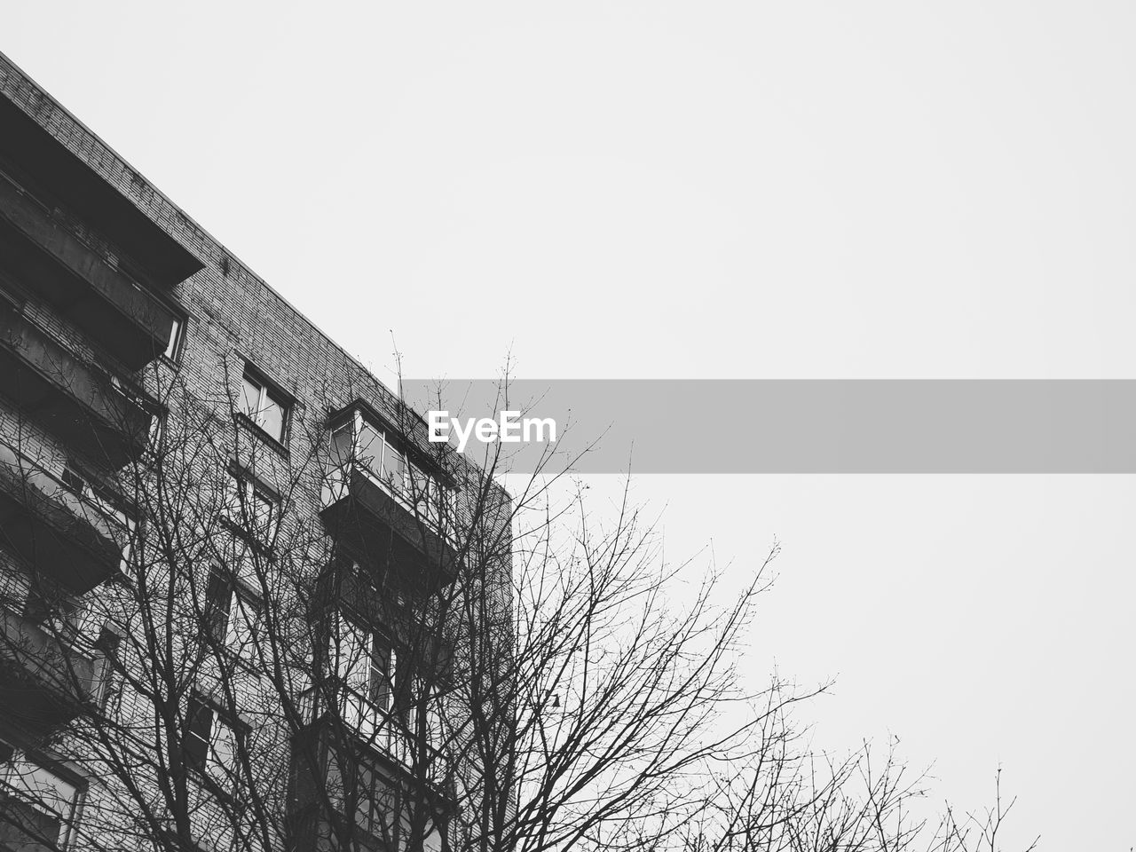 sky, architecture, built structure, low angle view, building exterior, copy space, tree, clear sky, no people, bare tree, nature, building, day, outdoors, industry, plant, construction industry, window, residential district, abandoned, apartment, height