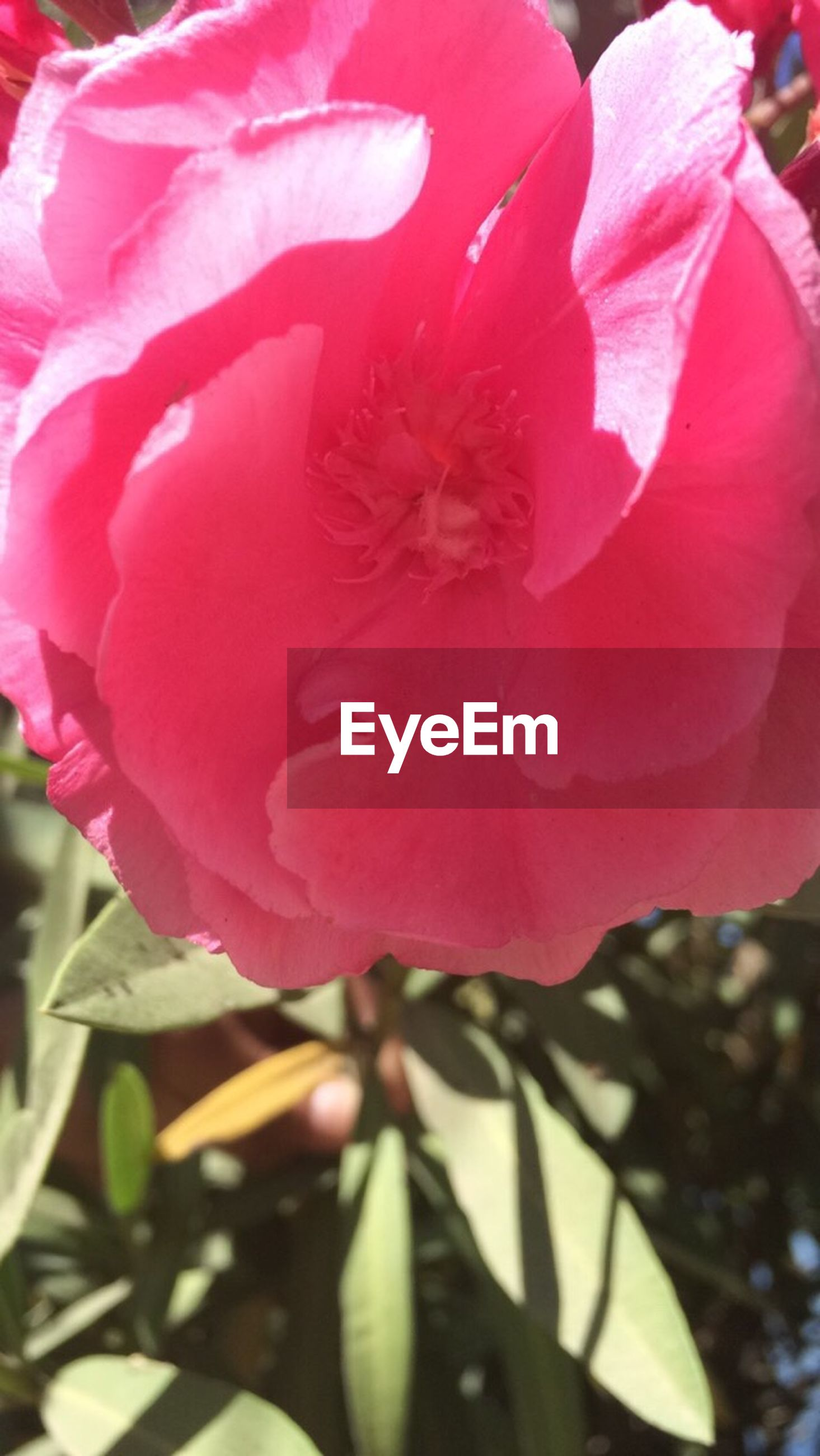 flower, petal, freshness, flower head, fragility, growth, beauty in nature, red, close-up, blooming, nature, pink color, single flower, plant, in bloom, focus on foreground, blossom, day, no people, outdoors