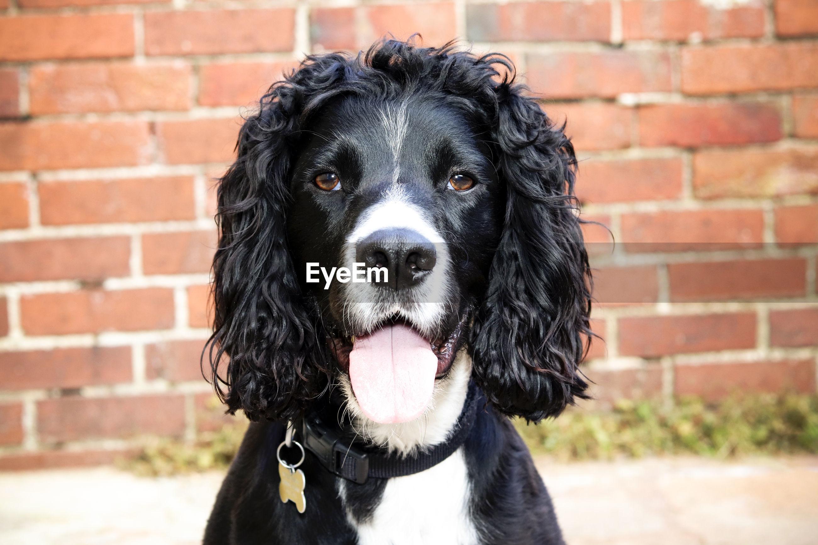 PORTRAIT OF A BLACK DOG AGAINST WALL