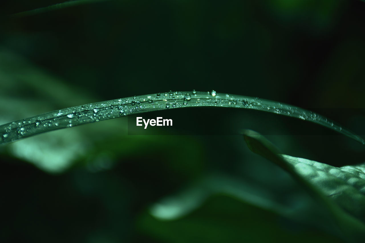 drop, water, close-up, plant, selective focus, wet, green color, leaf, beauty in nature, plant part, no people, nature, growth, freshness, purity, day, outdoors, focus on foreground, dew, blade of grass, rain, raindrop