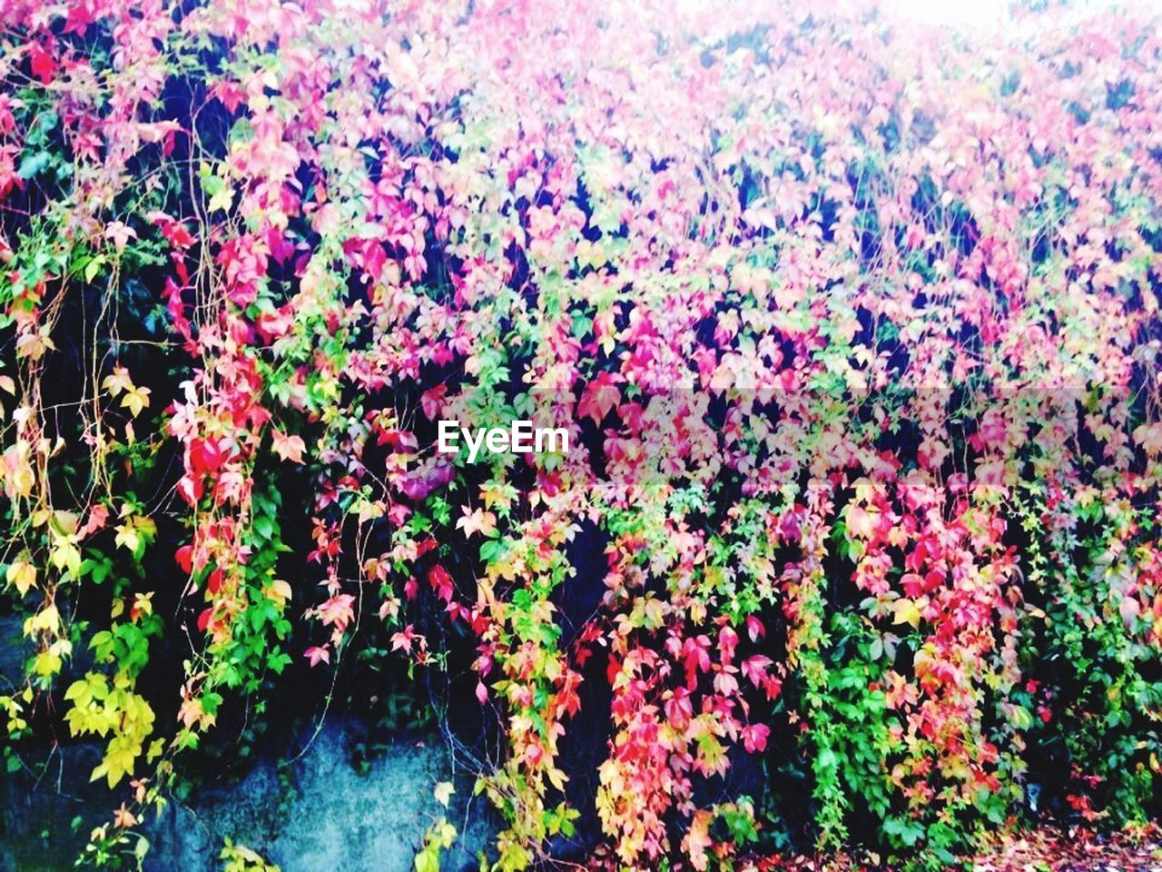 flower, growth, plant, nature, freshness, beauty in nature, outdoors, multi colored, day, no people, blooming, fragility