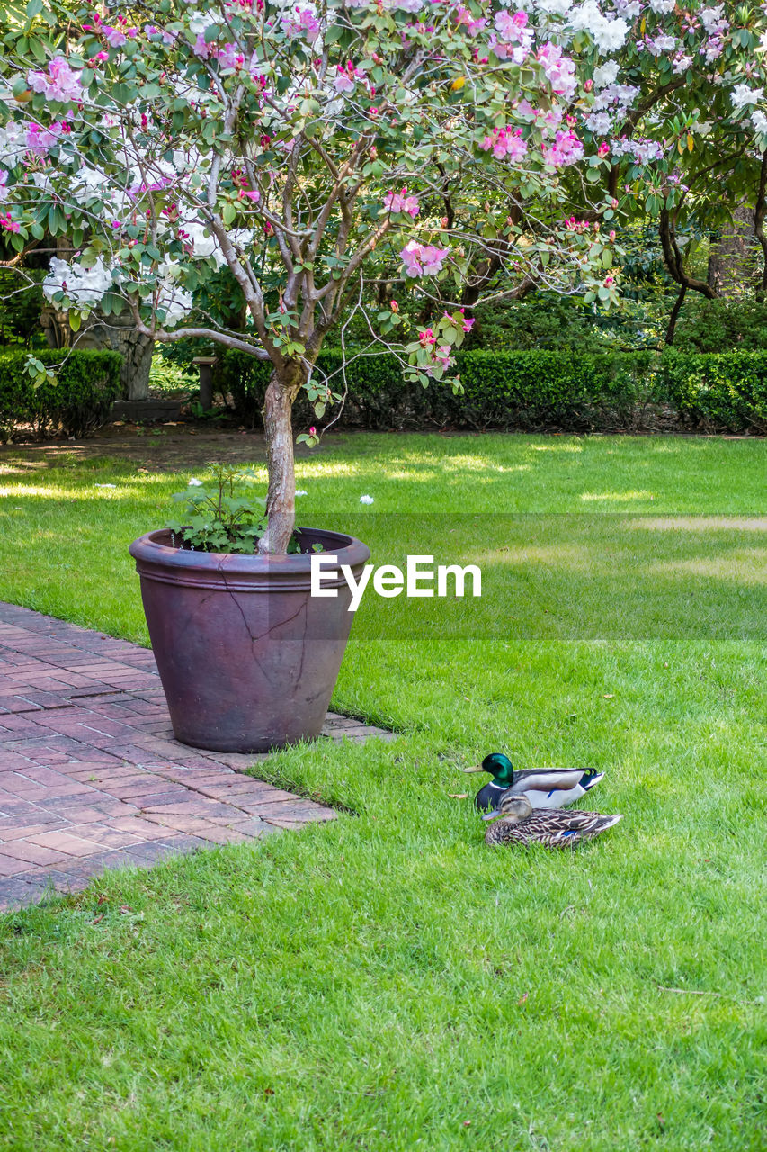 grass, tree, nature, growth, plant, green color, no people, day, outdoors, beauty in nature, flower, animal themes, bird
