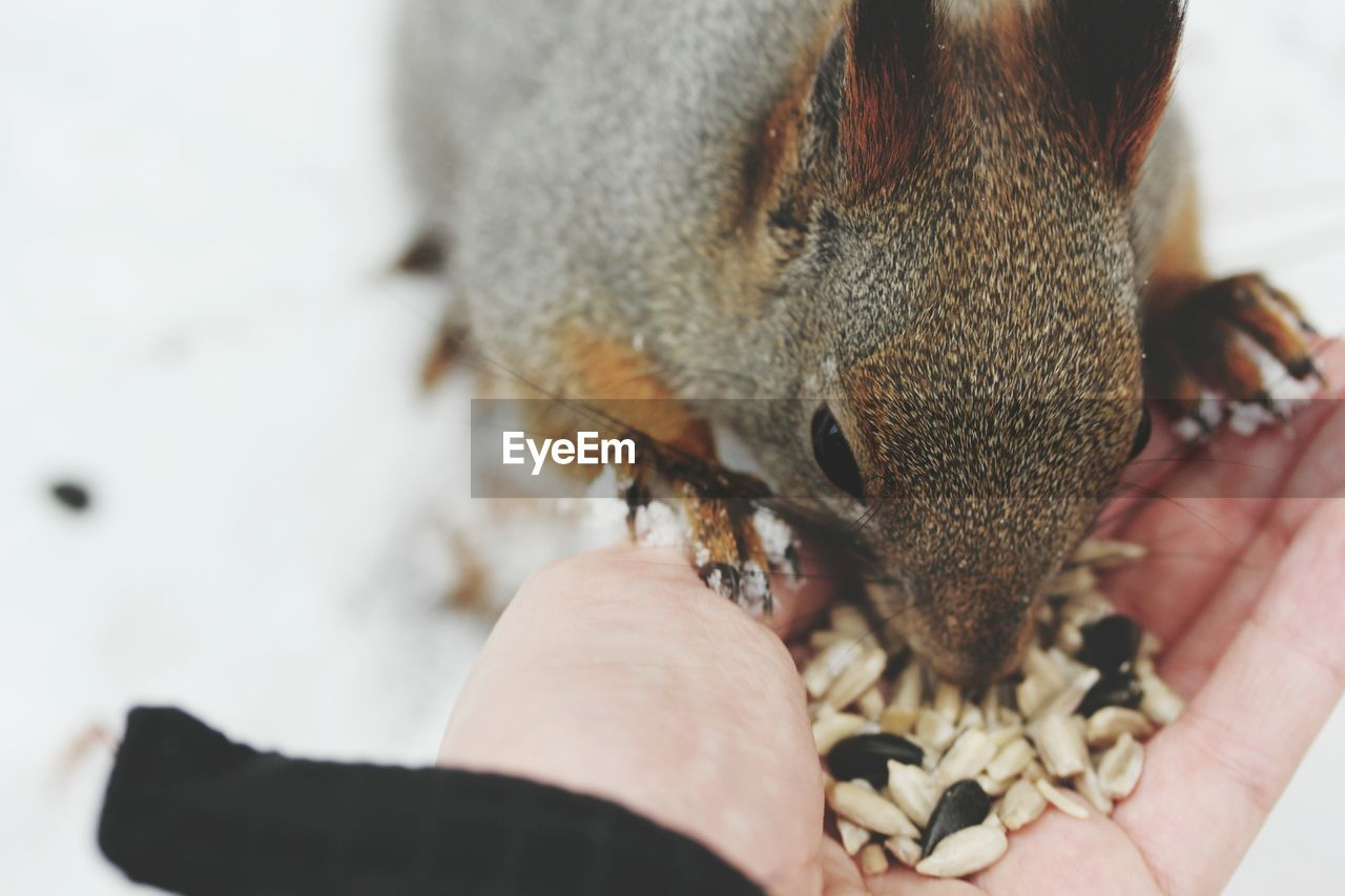 Close-Up Of Squirrel Being Fed
