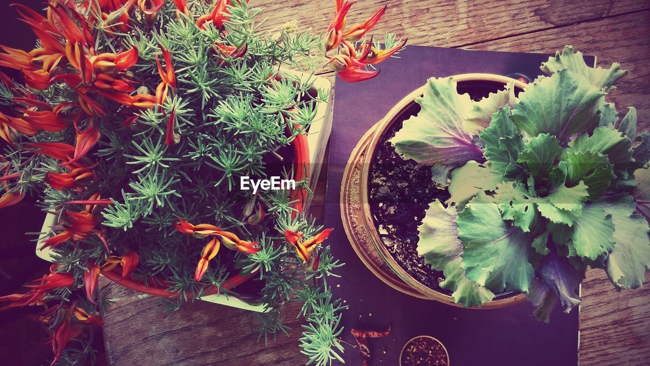 high angle view, plant, flower, potted plant, growth, leaf, freshness, no people, table, nature, green color, day, outdoors, beauty in nature, food, fragility, flower head, close-up