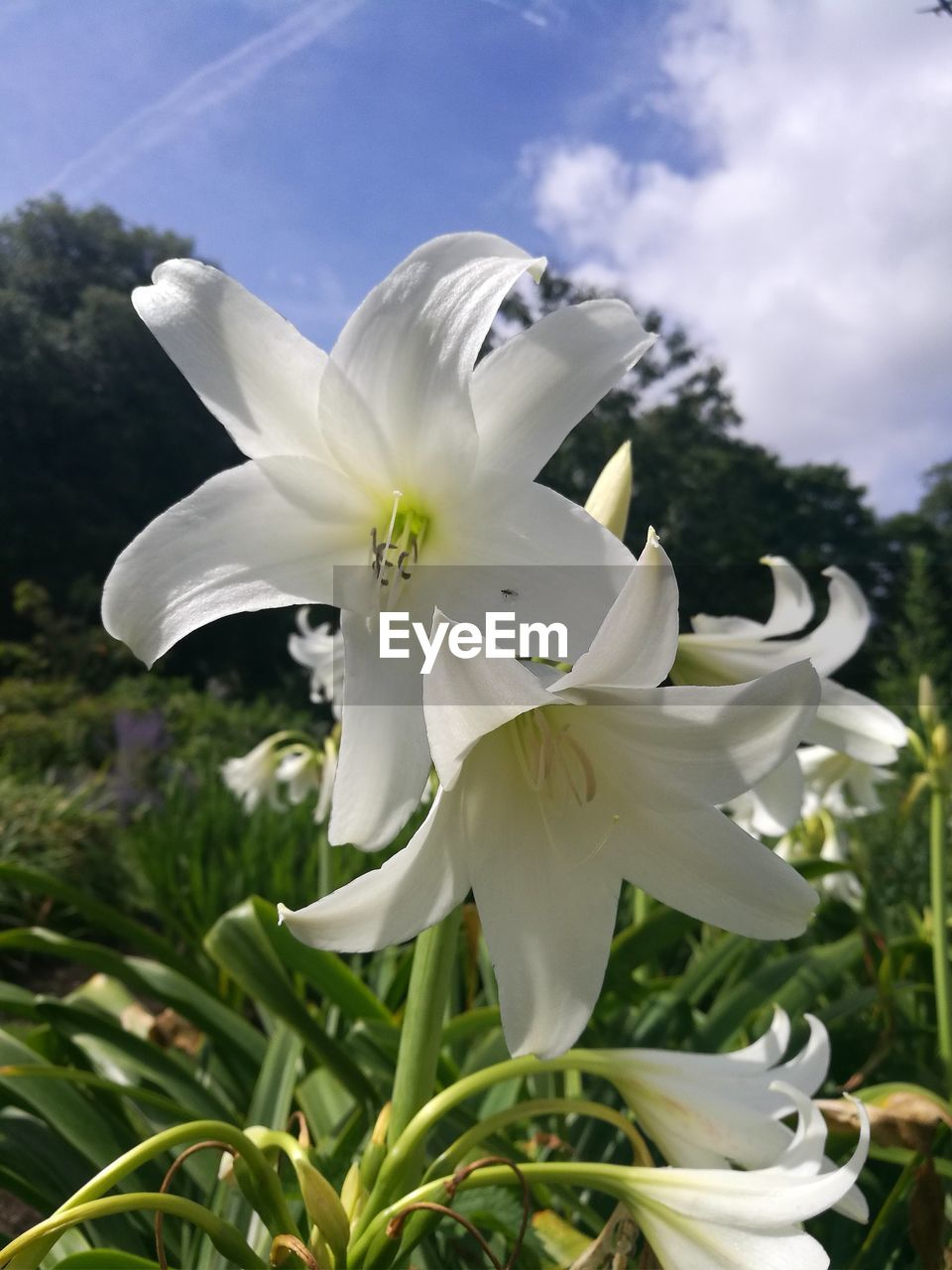flower, white color, petal, fragility, growth, beauty in nature, nature, flower head, freshness, day, plant, outdoors, blooming, no people, close-up, tree, stamen, sky, snowdrop