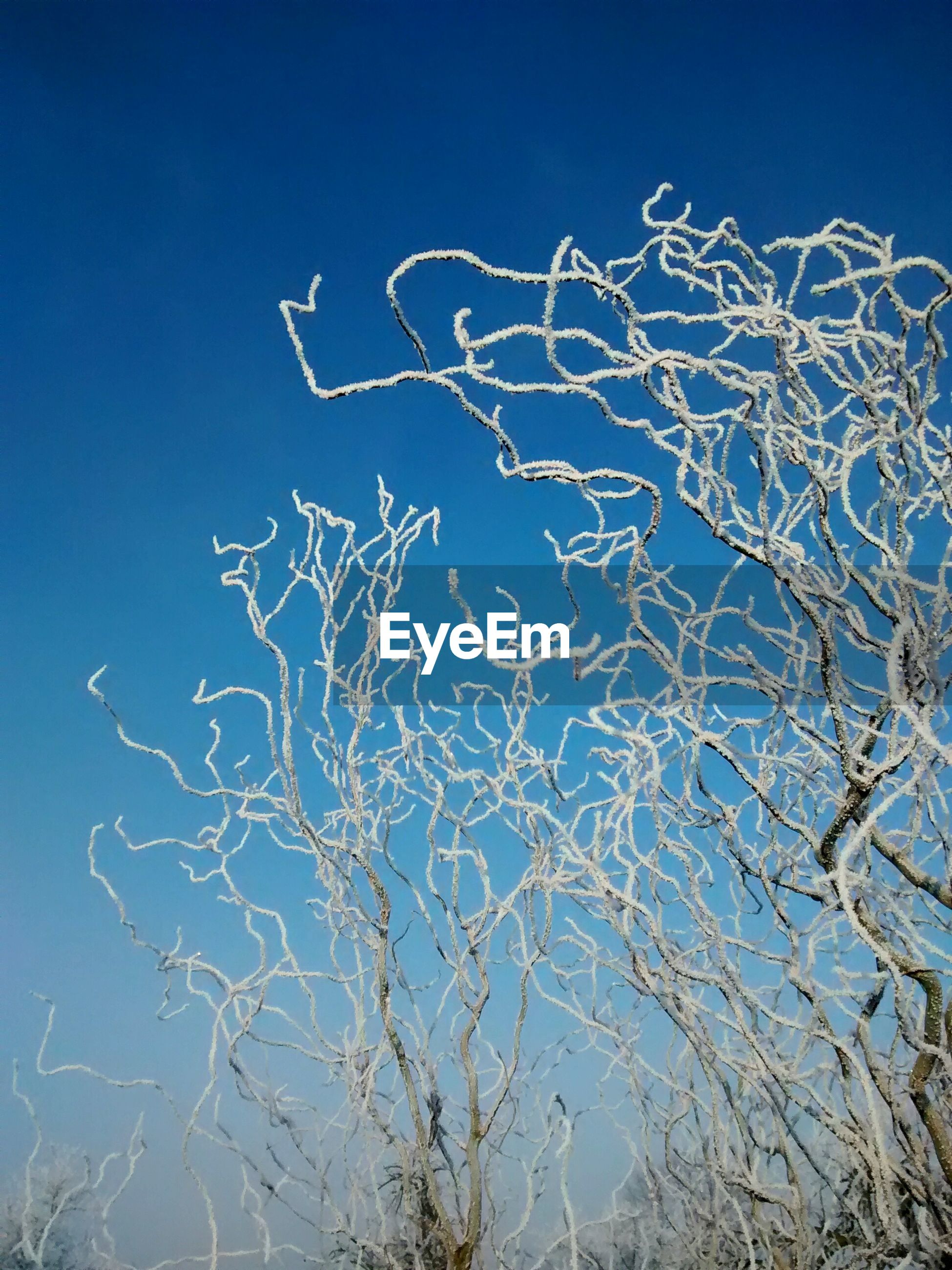 blue, low angle view, bare tree, clear sky, sky, nature, no people, creativity, western script, text, outdoors, day, art, tranquility, branch, tree, close-up, pattern, communication, art and craft