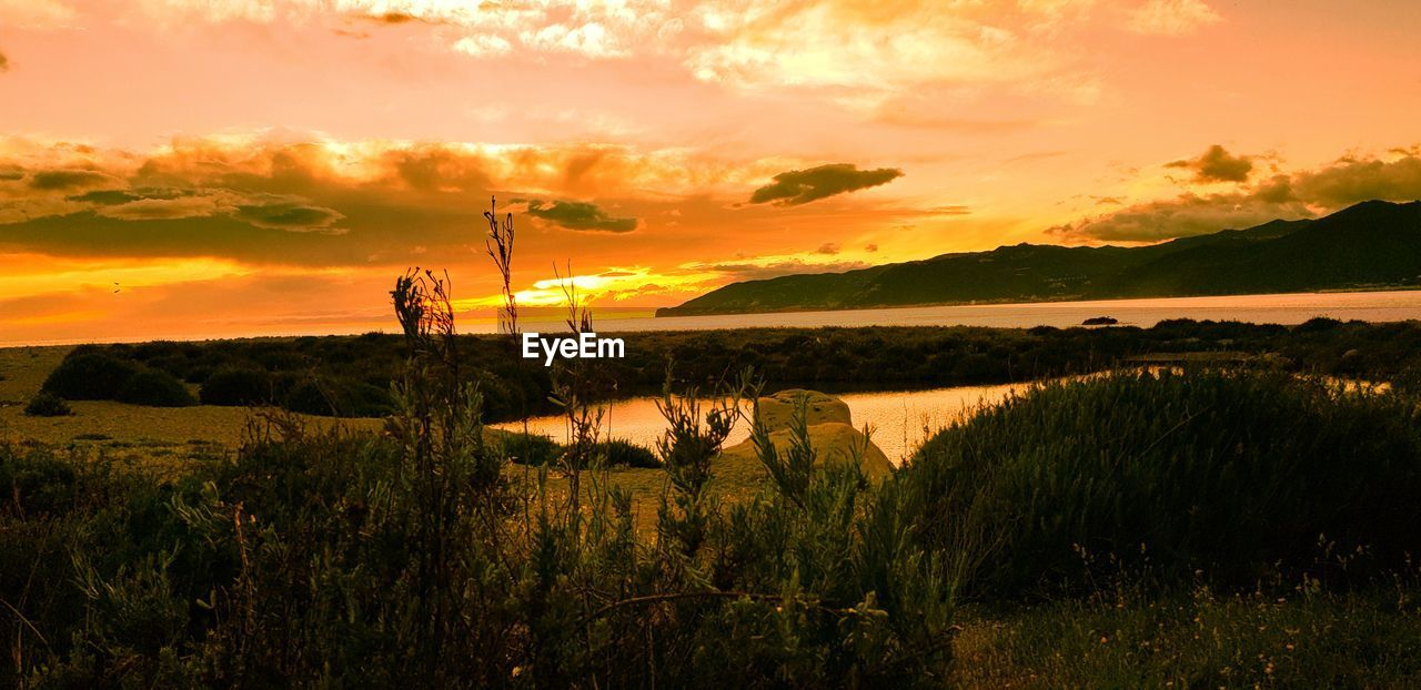 sunset, sky, beauty in nature, plant, scenics - nature, cloud - sky, orange color, grass, tranquility, nature, tranquil scene, land, growth, real people, idyllic, water, non-urban scene, field, landscape, outdoors