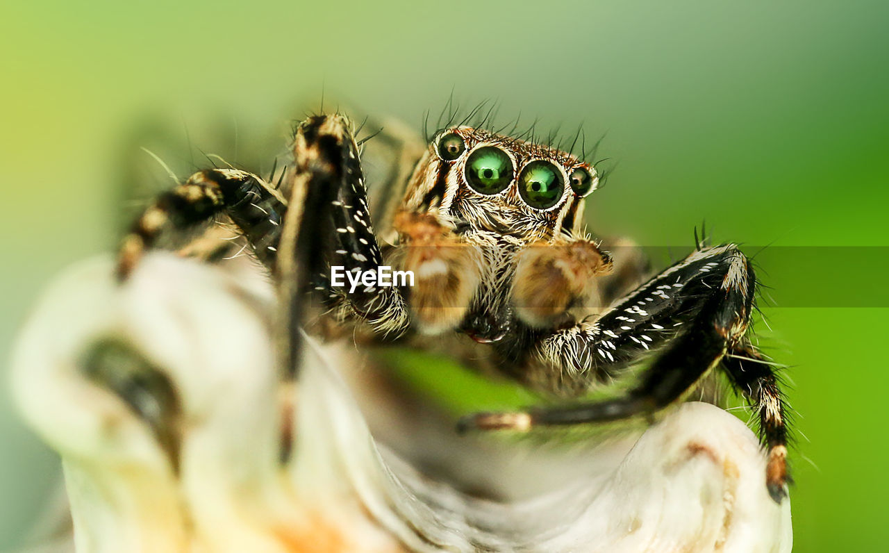 Close-Up Of Jumping Spider On Plant