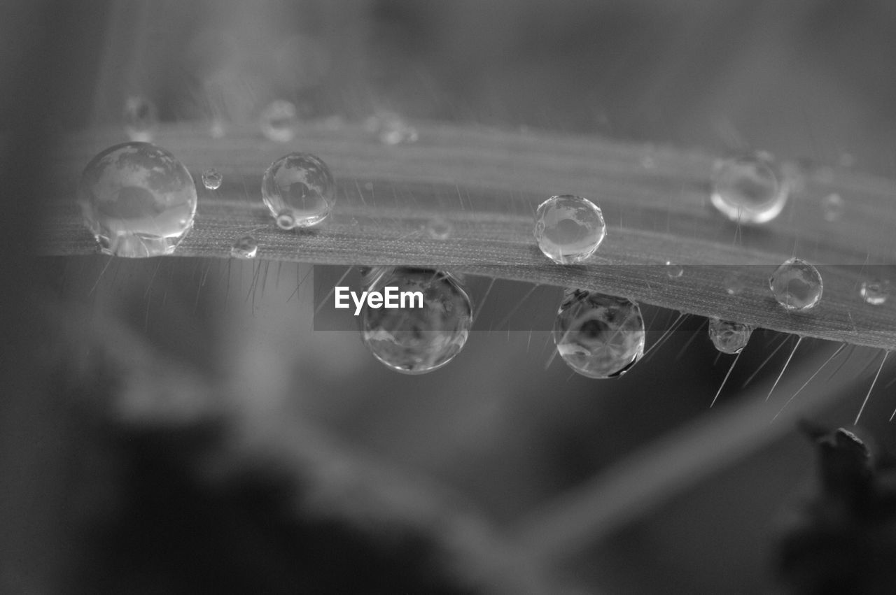 selective focus, close-up, fragility, water, drop, vulnerability, no people, wet, nature, spider web, day, outdoors, focus on foreground, purity, beauty in nature, transparent, dew, raindrop, rain, blade of grass