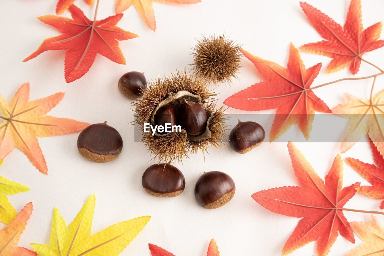 still life, leaf, plant part, no people, indoors, table, nut - food, nut, close-up, high angle view, chestnut - food, food, food and drink, orange color, white background, autumn, studio shot, brown, large group of objects, nature, leaves, change