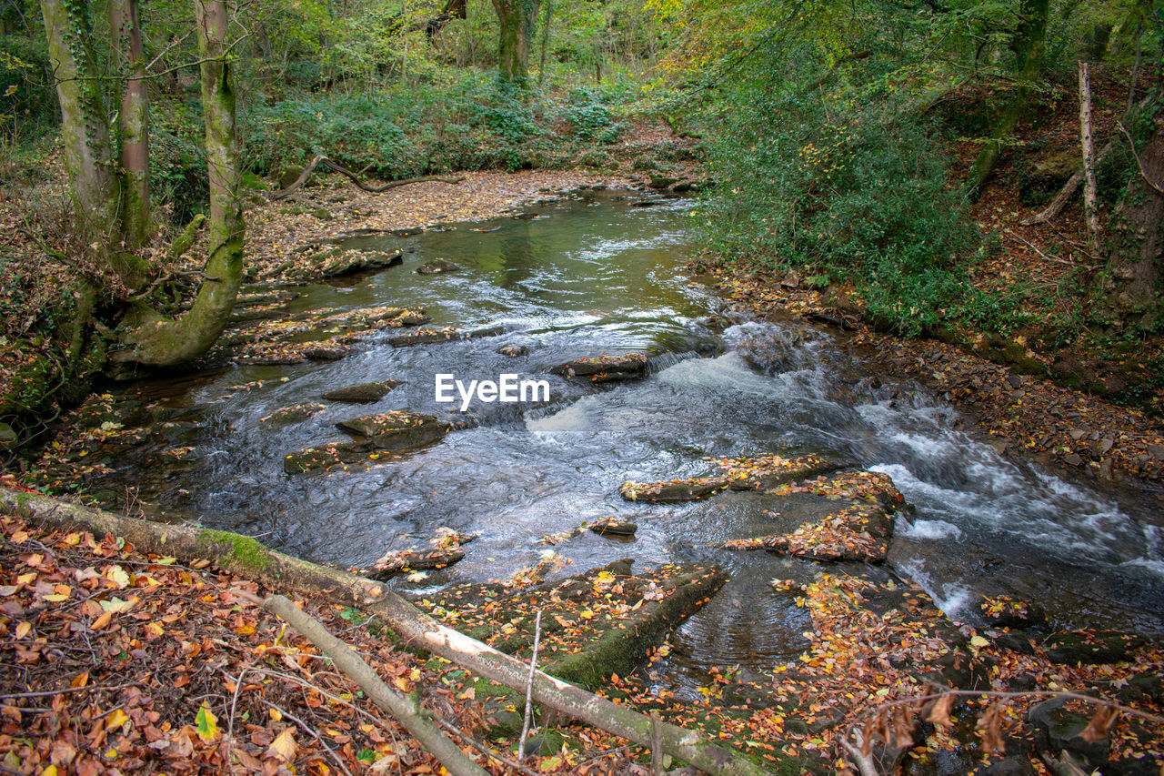 water, forest, tree, nature, land, no people, plant, tranquility, rock, stream - flowing water, day, motion, scenics - nature, beauty in nature, river, flowing water, solid, outdoors, rock - object, flowing