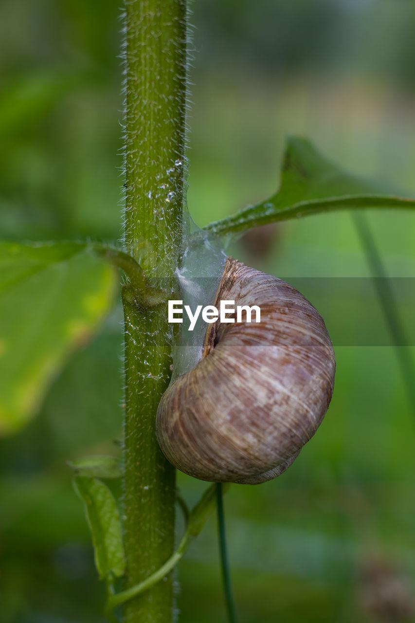 Close-up of snail on stem