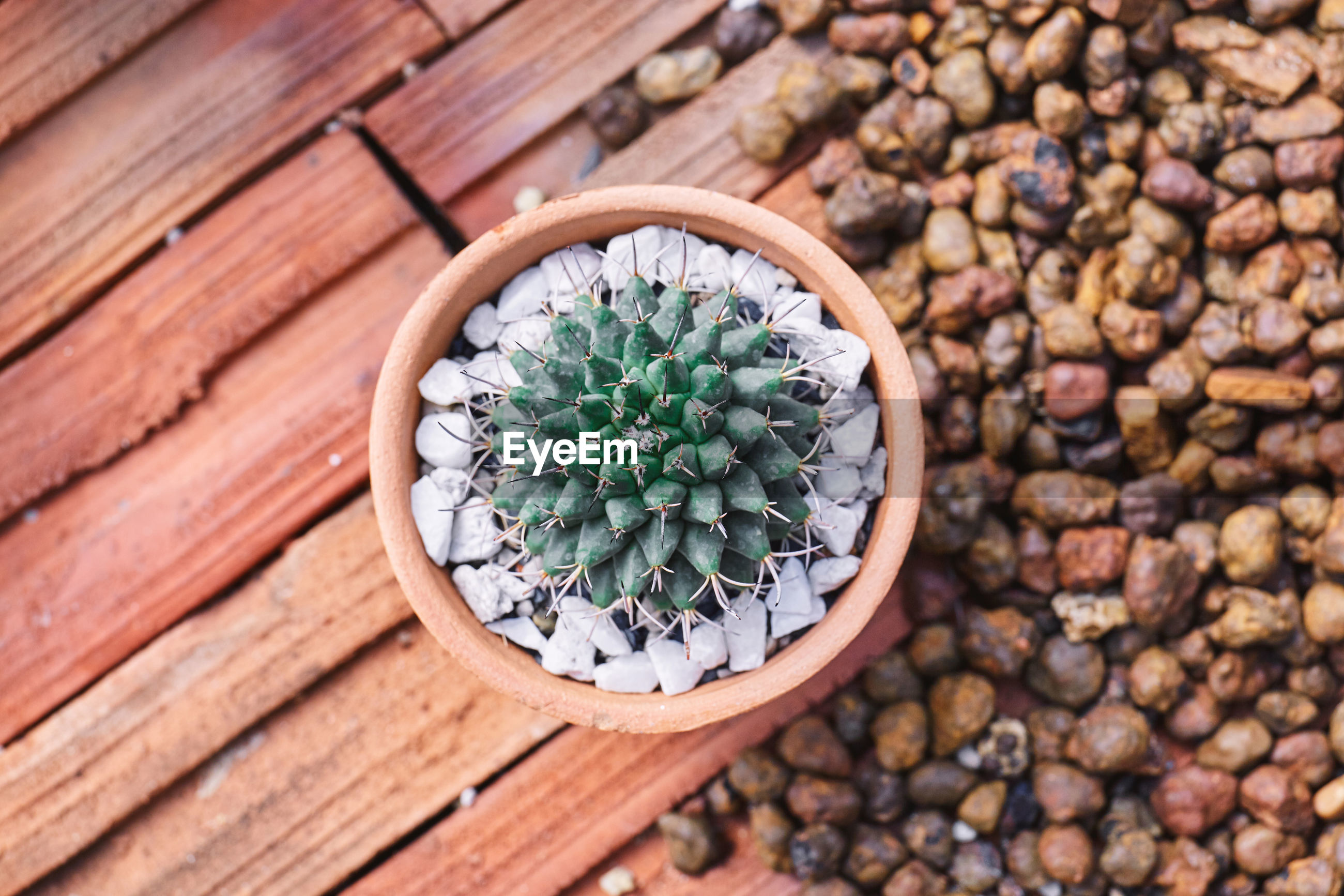 HIGH ANGLE VIEW OF SUCCULENT PLANT GROWING ON PEBBLES
