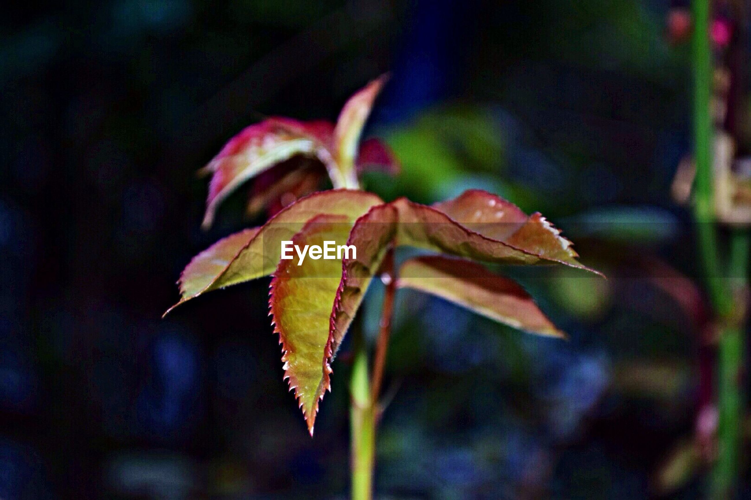 leaf, close-up, focus on foreground, growth, nature, autumn, plant, change, beauty in nature, season, leaf vein, leaves, selective focus, fragility, tranquility, dry, outdoors, stem, day, sunlight