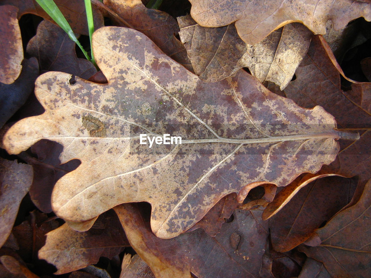 Close-up of autumn leaves on field