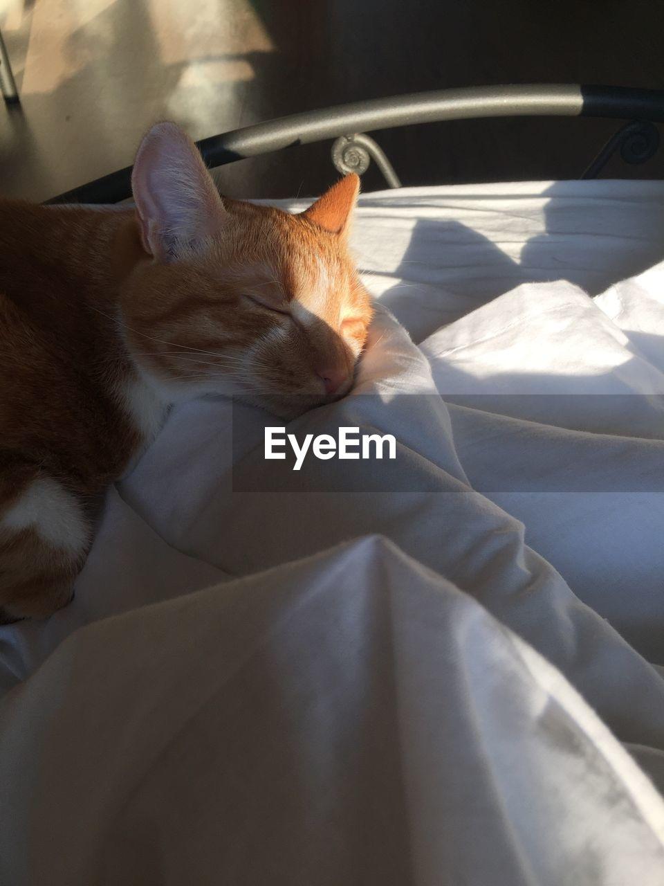 CAT SLEEPING IN BED