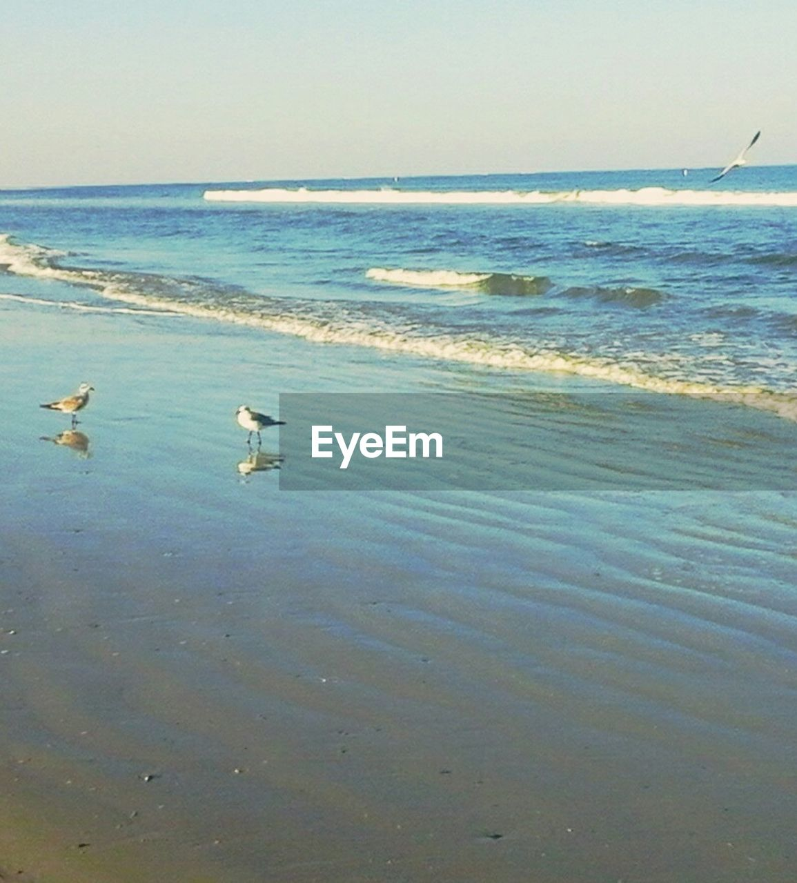 sea, bird, water, animal themes, nature, animals in the wild, one animal, beauty in nature, horizon over water, beach, scenics, no people, day, wave, animal wildlife, tranquility, outdoors, seagull, sky, swimming, swan