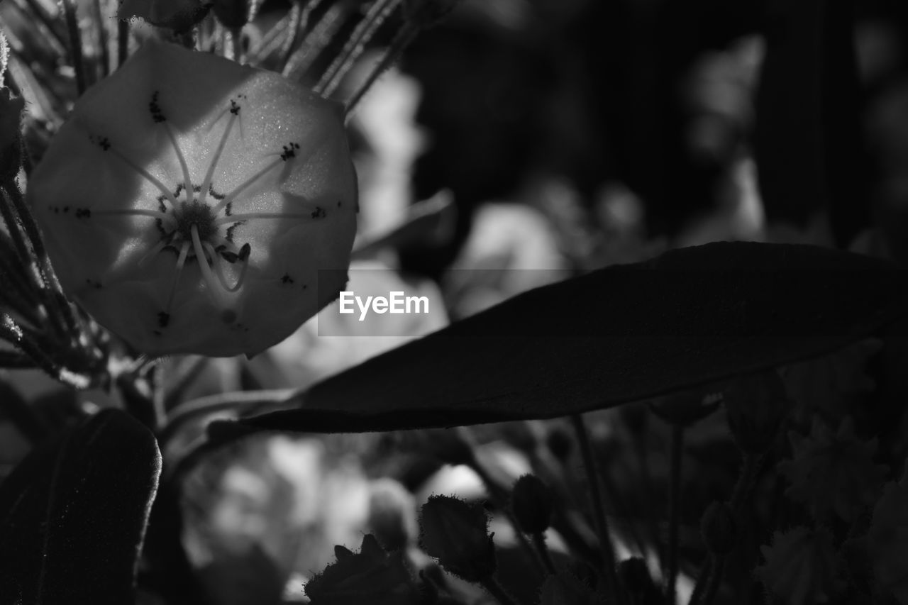 flower, growth, close-up, nature, fragility, focus on foreground, plant, beauty in nature, petal, flower head, freshness, outdoors, day, no people, tree