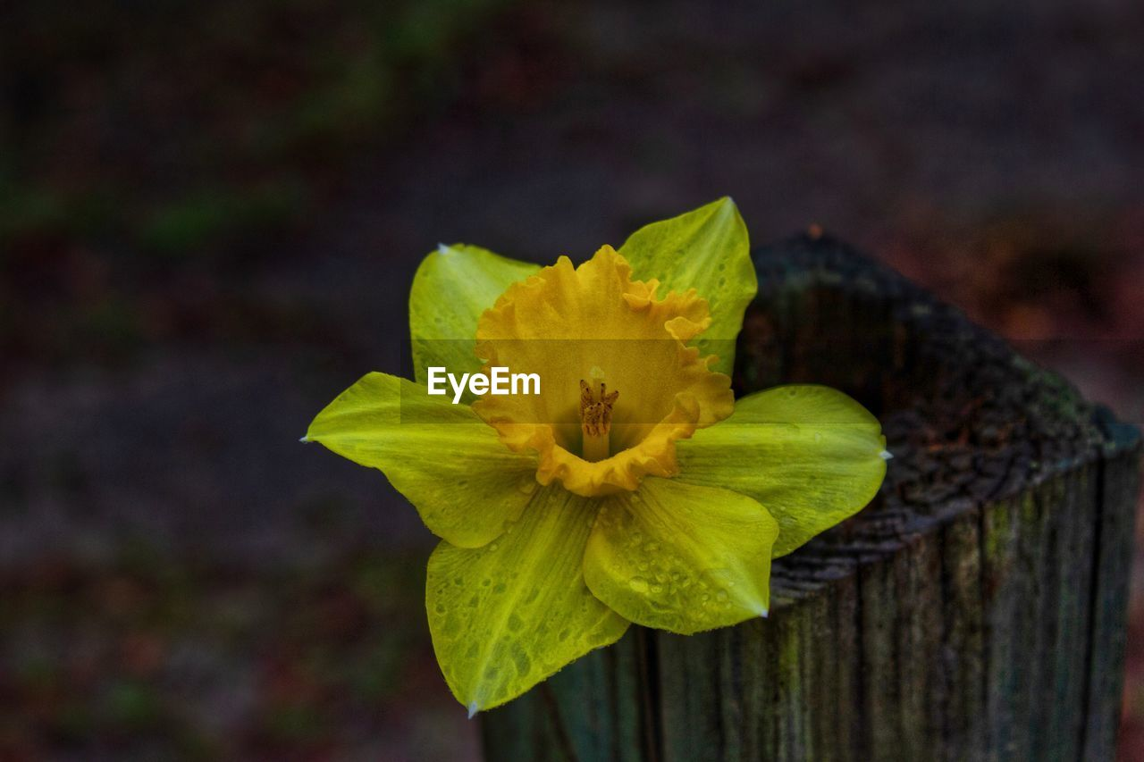 flower, flowering plant, fragility, vulnerability, inflorescence, close-up, freshness, flower head, plant, petal, beauty in nature, yellow, growth, focus on foreground, nature, no people, day, pollen, outdoors