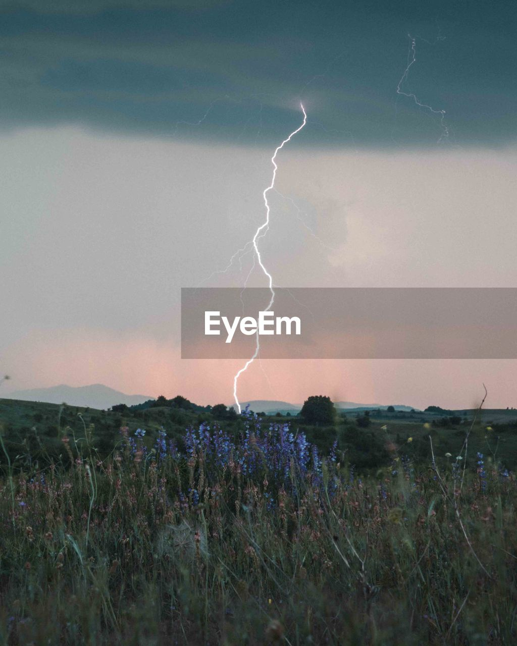 cloud - sky, lightning, sky, beauty in nature, power in nature, storm, environment, nature, power, thunderstorm, landscape, no people, field, scenics - nature, plant, forked lightning, growth, land, outdoors, light, purple