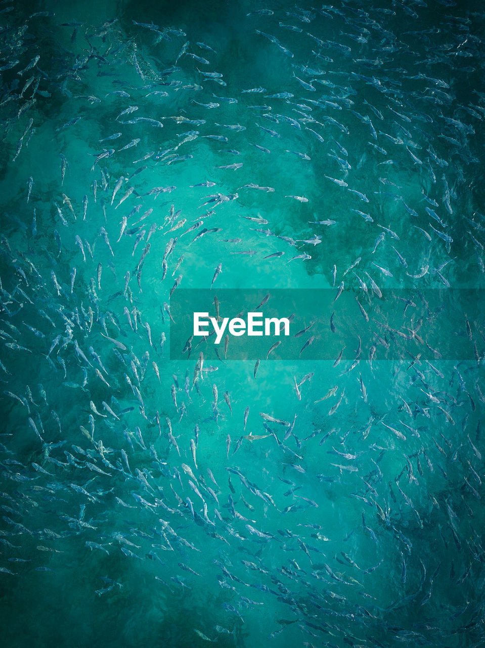 Full frame shot of fishes in sea