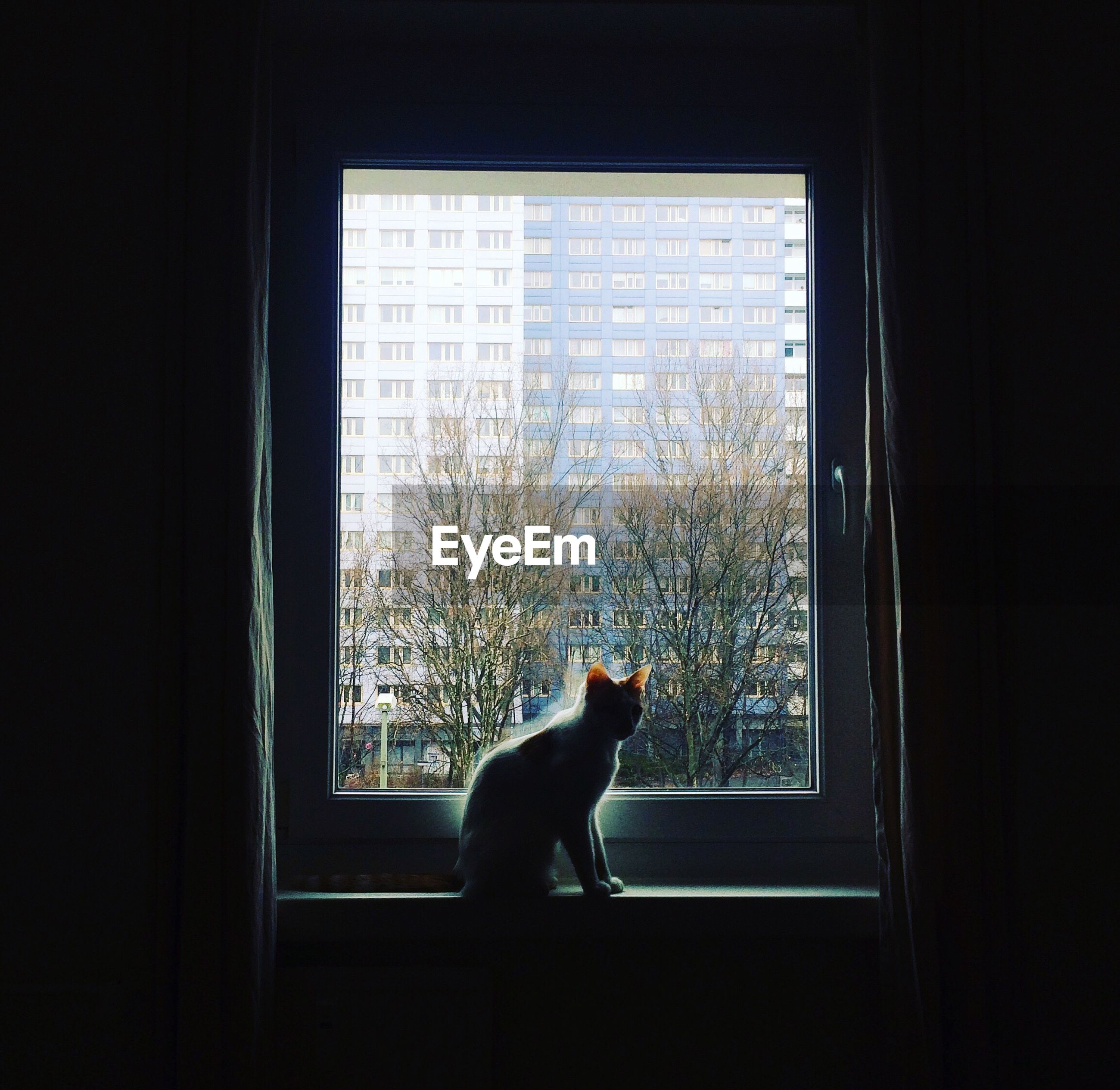 Cat sitting on window sill in darkroom