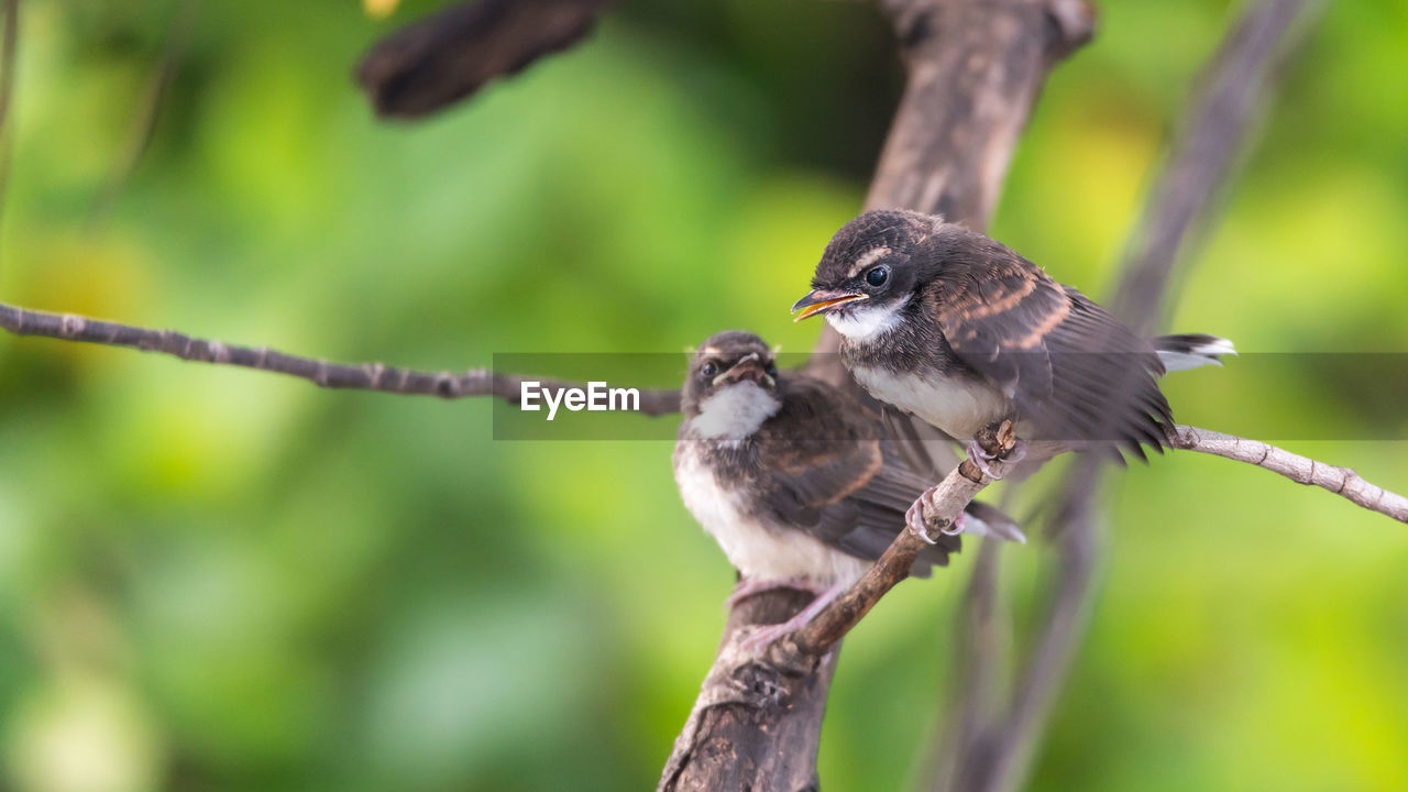 animal wildlife, animal themes, animal, bird, vertebrate, animals in the wild, perching, tree, one animal, branch, plant, focus on foreground, no people, nature, close-up, day, sparrow, selective focus, outdoors