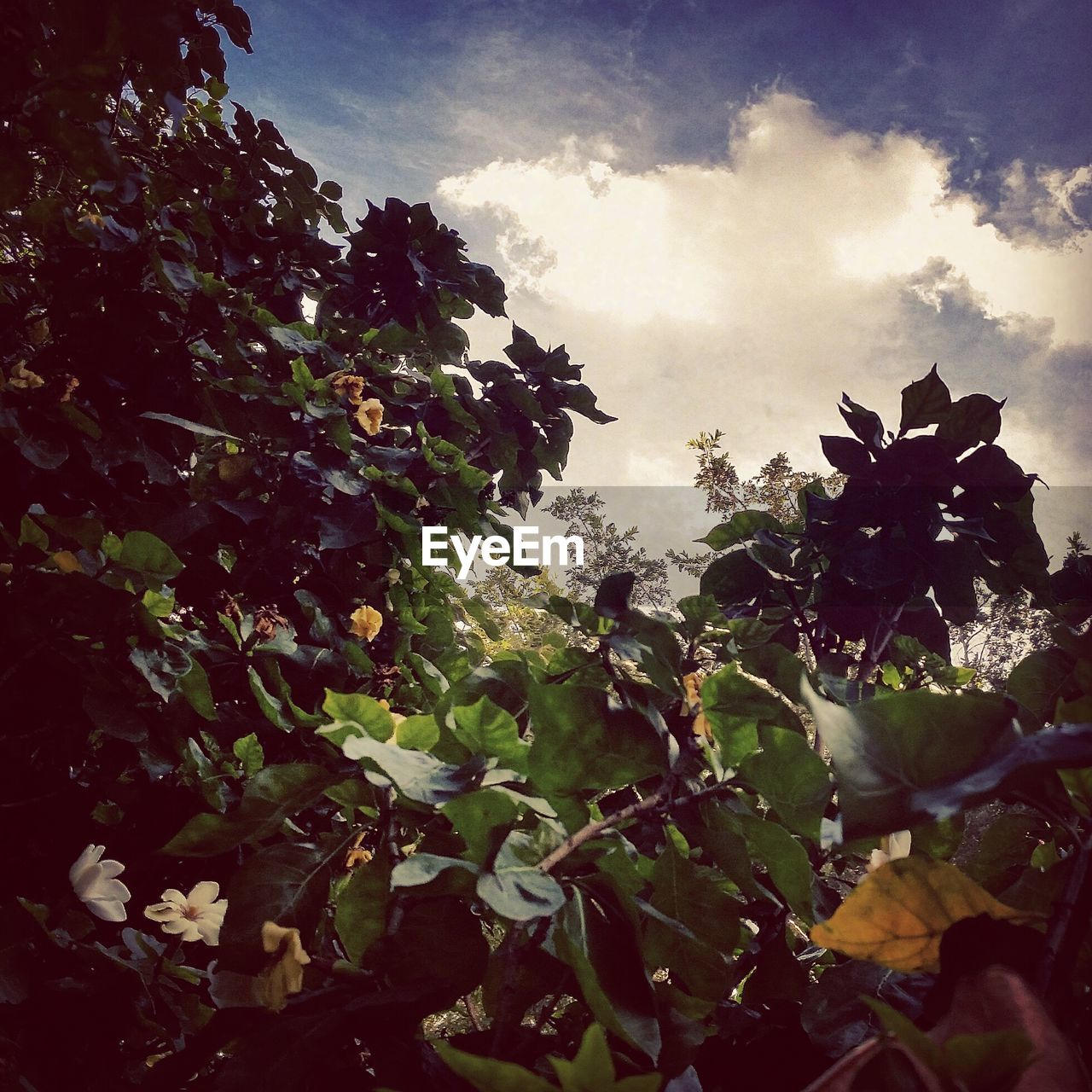 growth, nature, beauty in nature, plant, leaf, no people, outdoors, low angle view, tree, sky, day, cloud - sky, freshness, flower, fragility, close-up