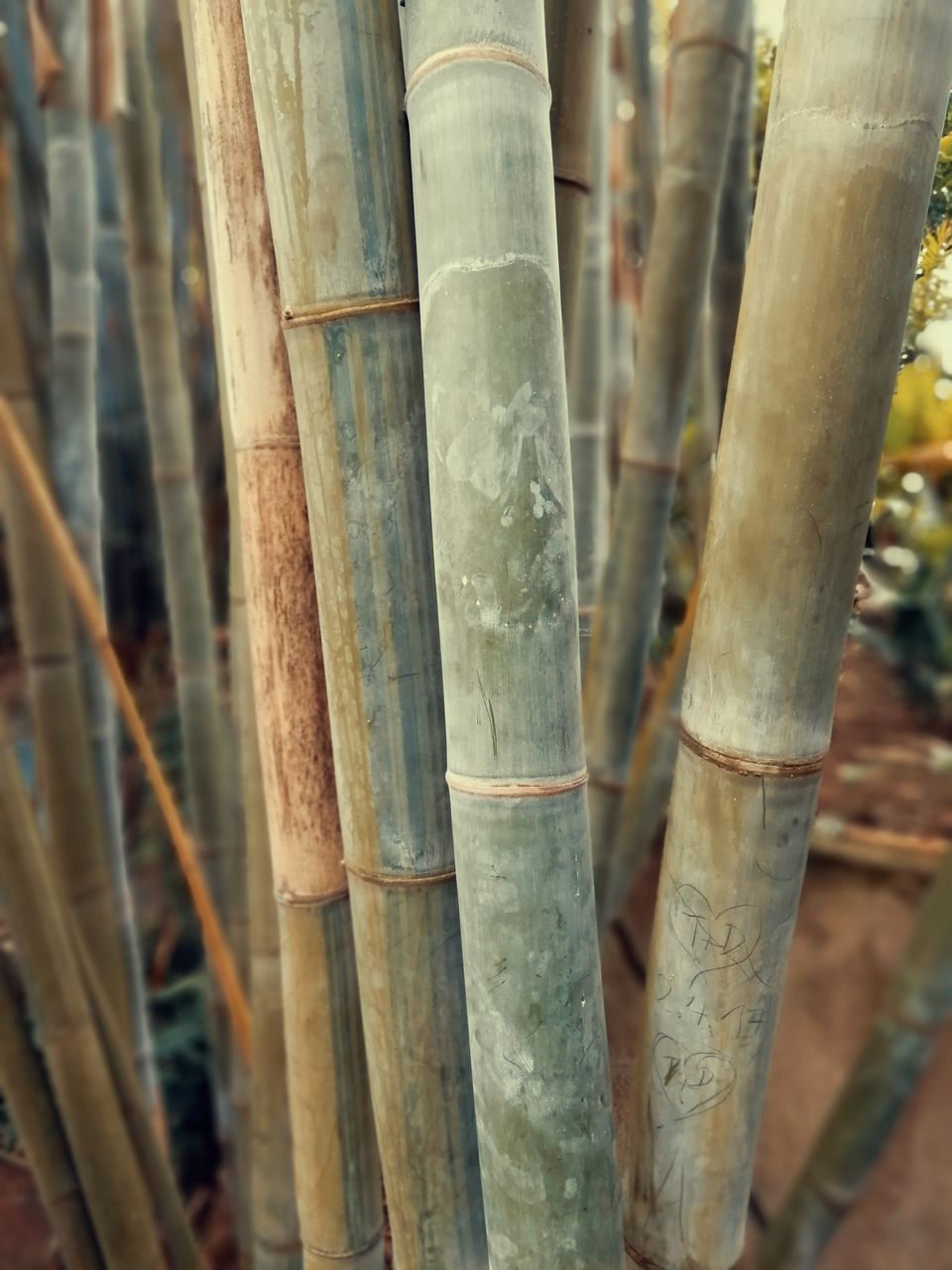 bamboo, no people, close-up, bamboo - plant, day, focus on foreground, nature, outdoors, growth, plant, wood - material, full frame, selective focus, backgrounds, tree, bamboo grove, beauty in nature, land, forest, tree trunk