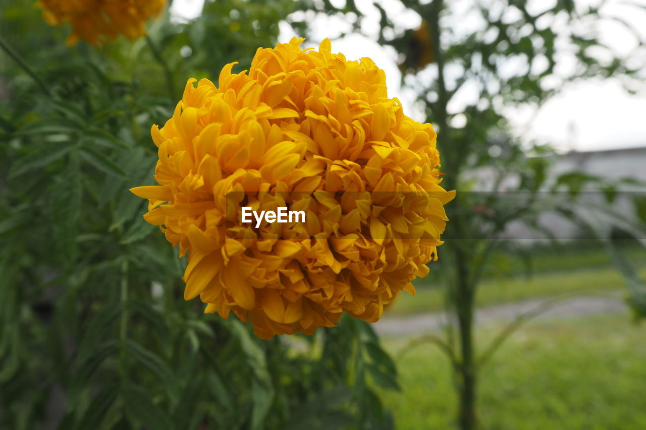 flower, fragility, beauty in nature, freshness, petal, yellow, growth, nature, focus on foreground, flower head, plant, close-up, blooming, day, outdoors, no people