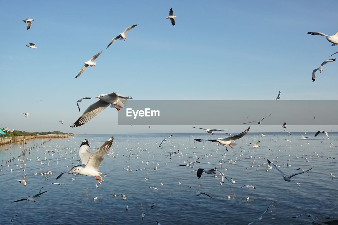 animals in the wild, bird, group of animals, animal wildlife, animal themes, animal, vertebrate, flying, large group of animals, spread wings, sky, seagull, mid-air, water, flock of birds, nature, sea, beauty in nature, no people, sea bird, horizon over water