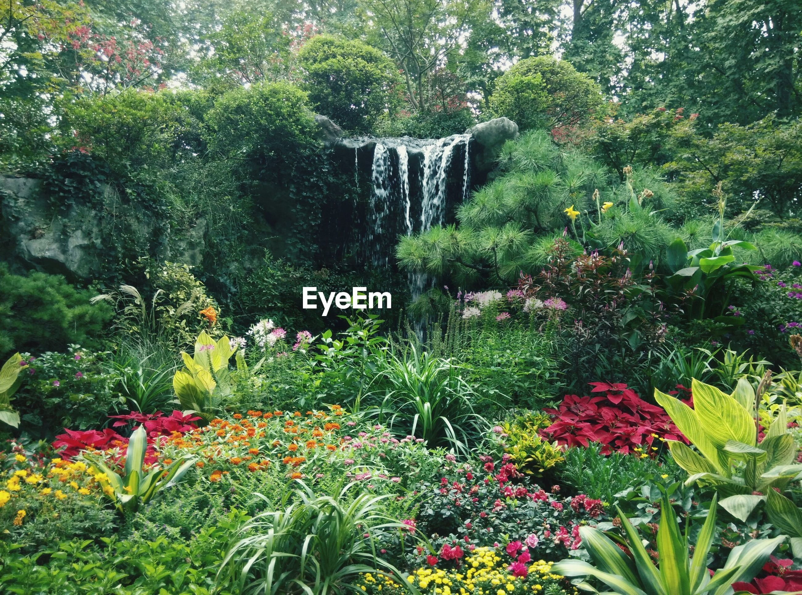 flower, growth, freshness, plant, beauty in nature, fragility, green color, nature, tree, blooming, petal, leaf, in bloom, formal garden, park - man made space, blossom, day, multi colored, lush foliage, growing