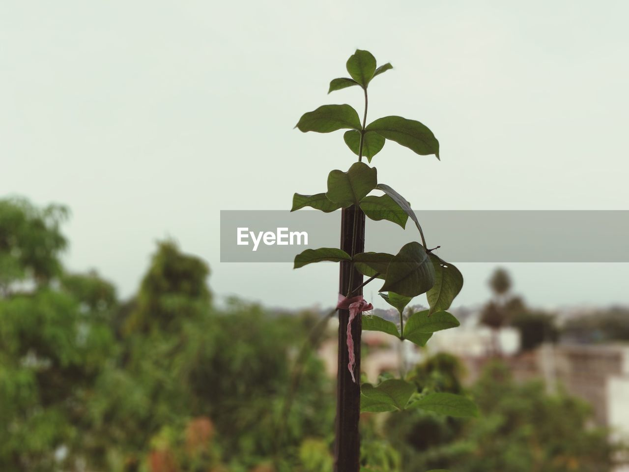 growth, plant, focus on foreground, no people, nature, leaf, green color, day, outdoors, close-up, tree, low angle view, beauty in nature, sky, clear sky, fragility