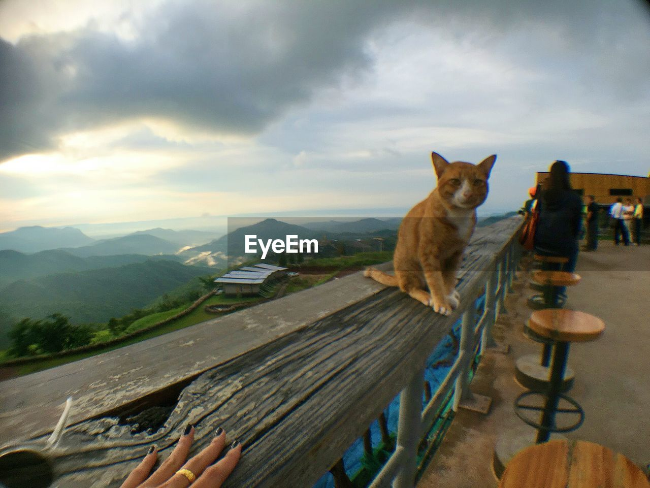 sky, domestic cat, domestic animals, cloud - sky, animal themes, pets, mammal, one animal, feline, outdoors, day, sitting, mountain, no people, nature