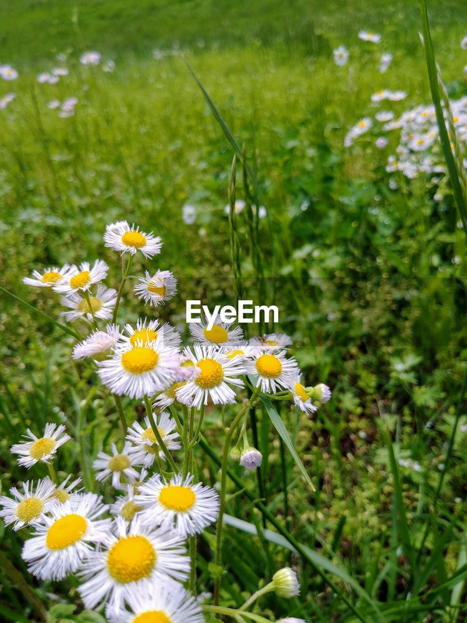 flowering plant, flower, plant, freshness, fragility, vulnerability, growth, beauty in nature, petal, inflorescence, flower head, nature, close-up, field, land, focus on foreground, day, no people, grass, yellow, outdoors, pollen