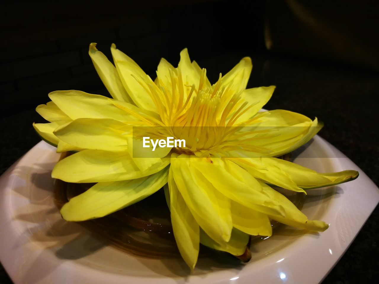 flower, yellow, freshness, petal, no people, close-up, flower head, fragility, indoors, food, beauty in nature, day, nature