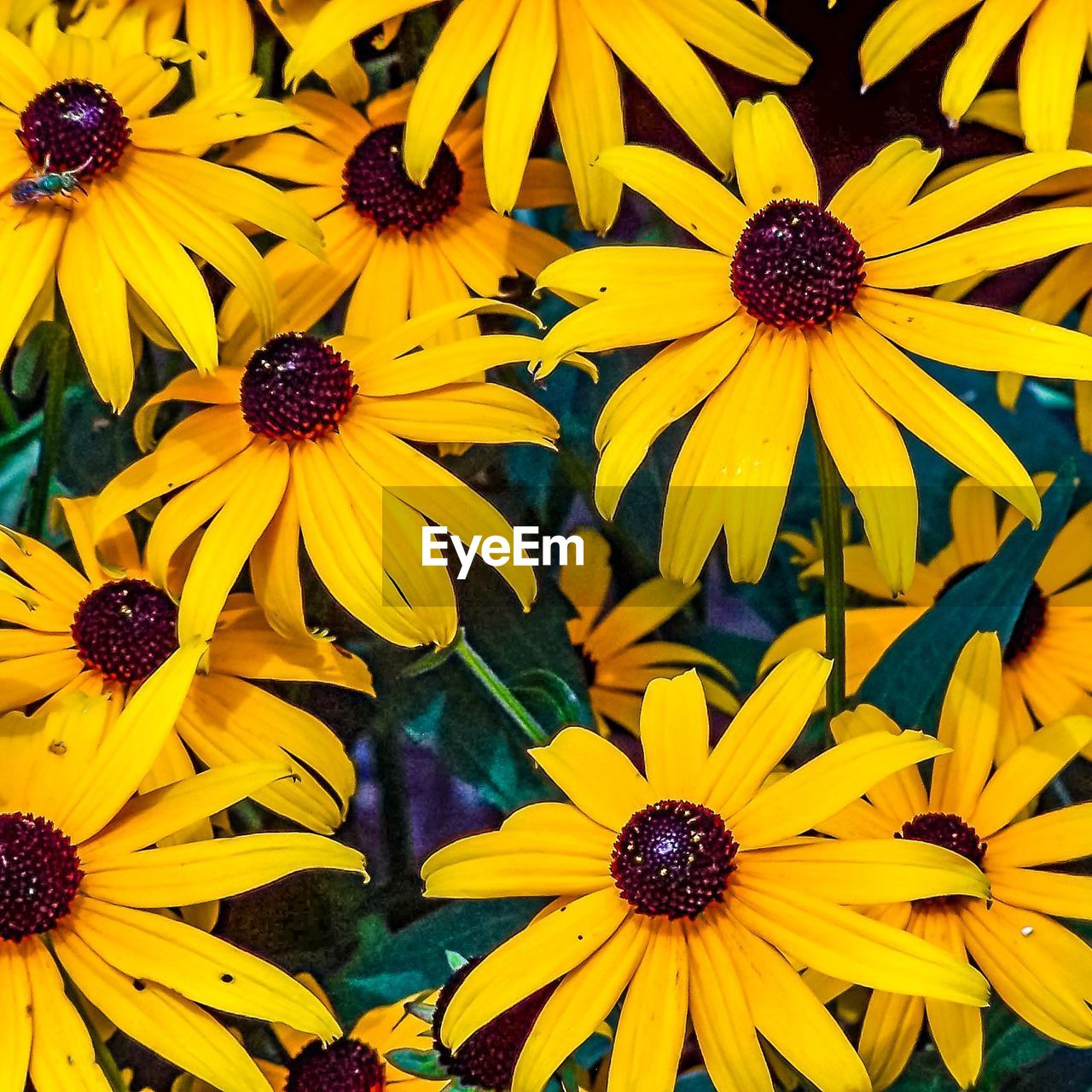 flower, petal, yellow, fragility, freshness, beauty in nature, nature, flower head, growth, black-eyed susan, pollen, blooming, no people, plant, day, outdoors, close-up, osteospermum