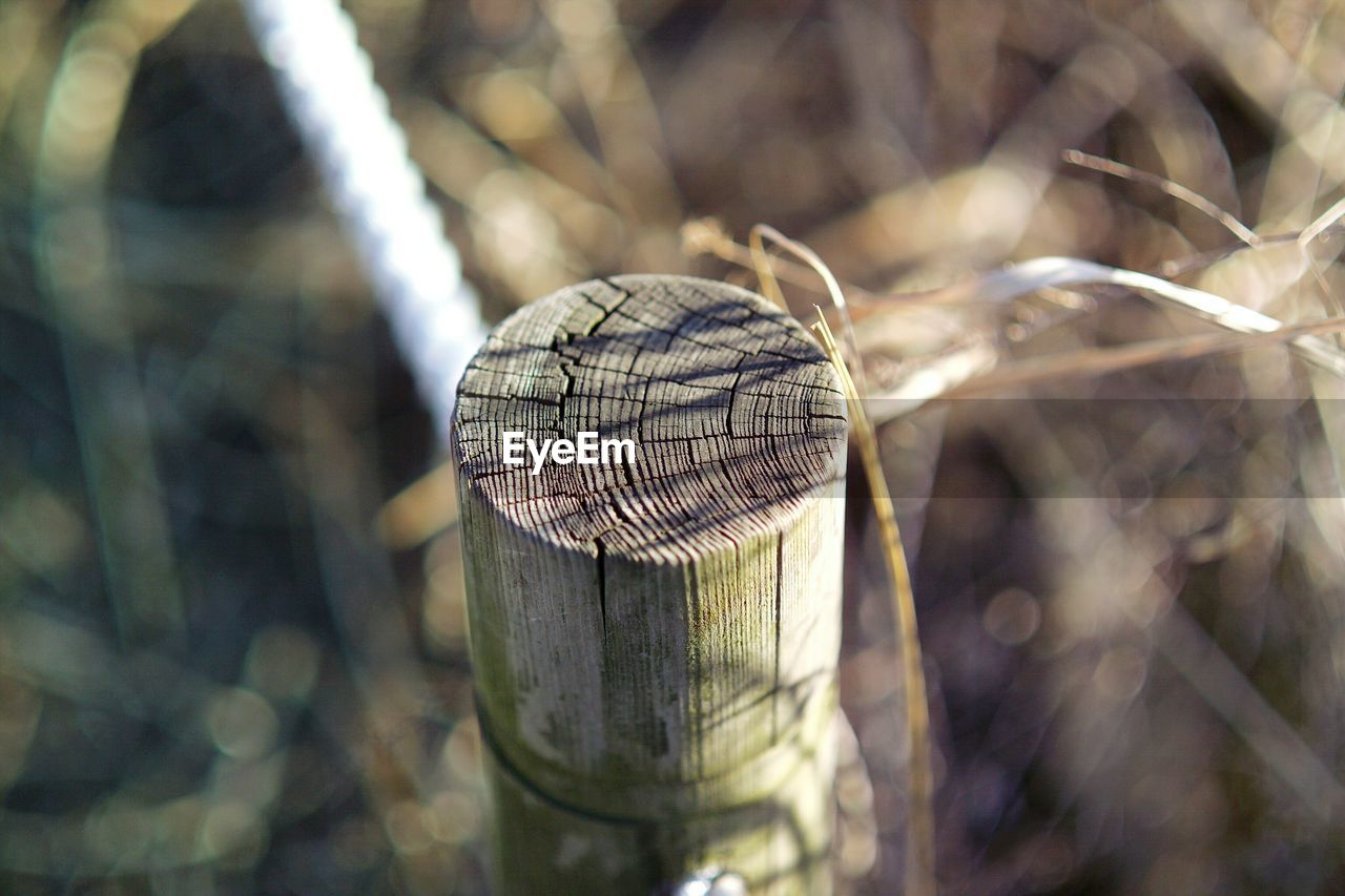 close-up, day, no people, selective focus, nature, focus on foreground, outdoors, tree, wood - material, plant, sunlight, pattern, fence, textured, boundary, land, growth, forest, security, barrier
