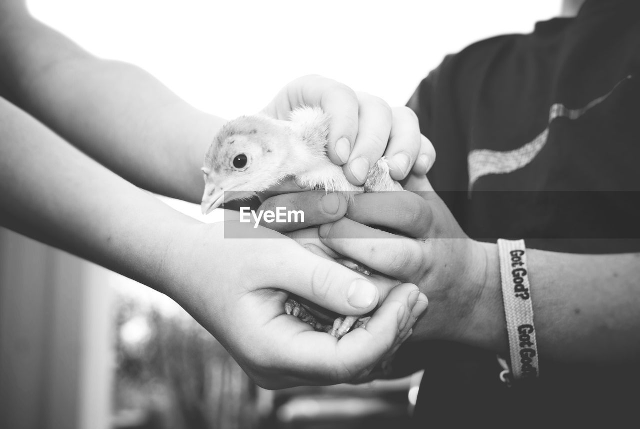 human hand, hand, one animal, human body part, holding, real people, midsection, focus on foreground, one person, close-up, vertebrate, women, pets, day, care, finger, domestic, pet owner