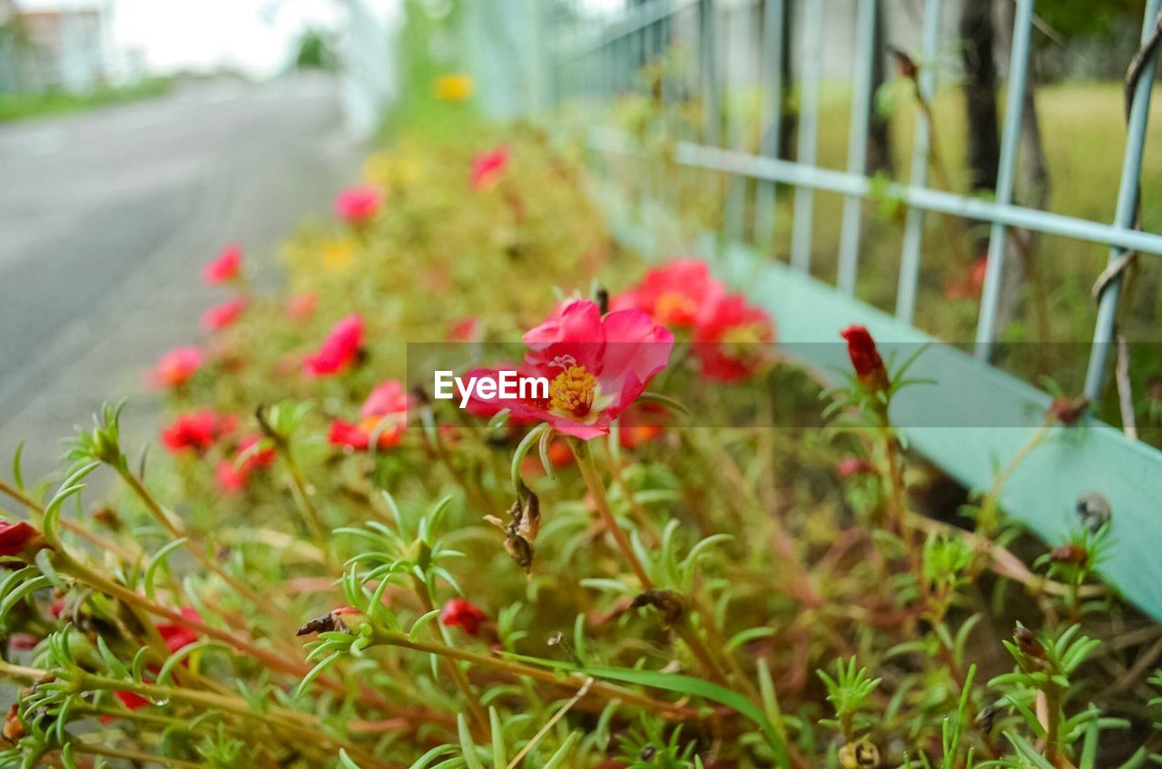 flower, growth, petal, plant, nature, no people, outdoors, fragility, flower head, focus on foreground, blooming, day, freshness, beauty in nature, close-up