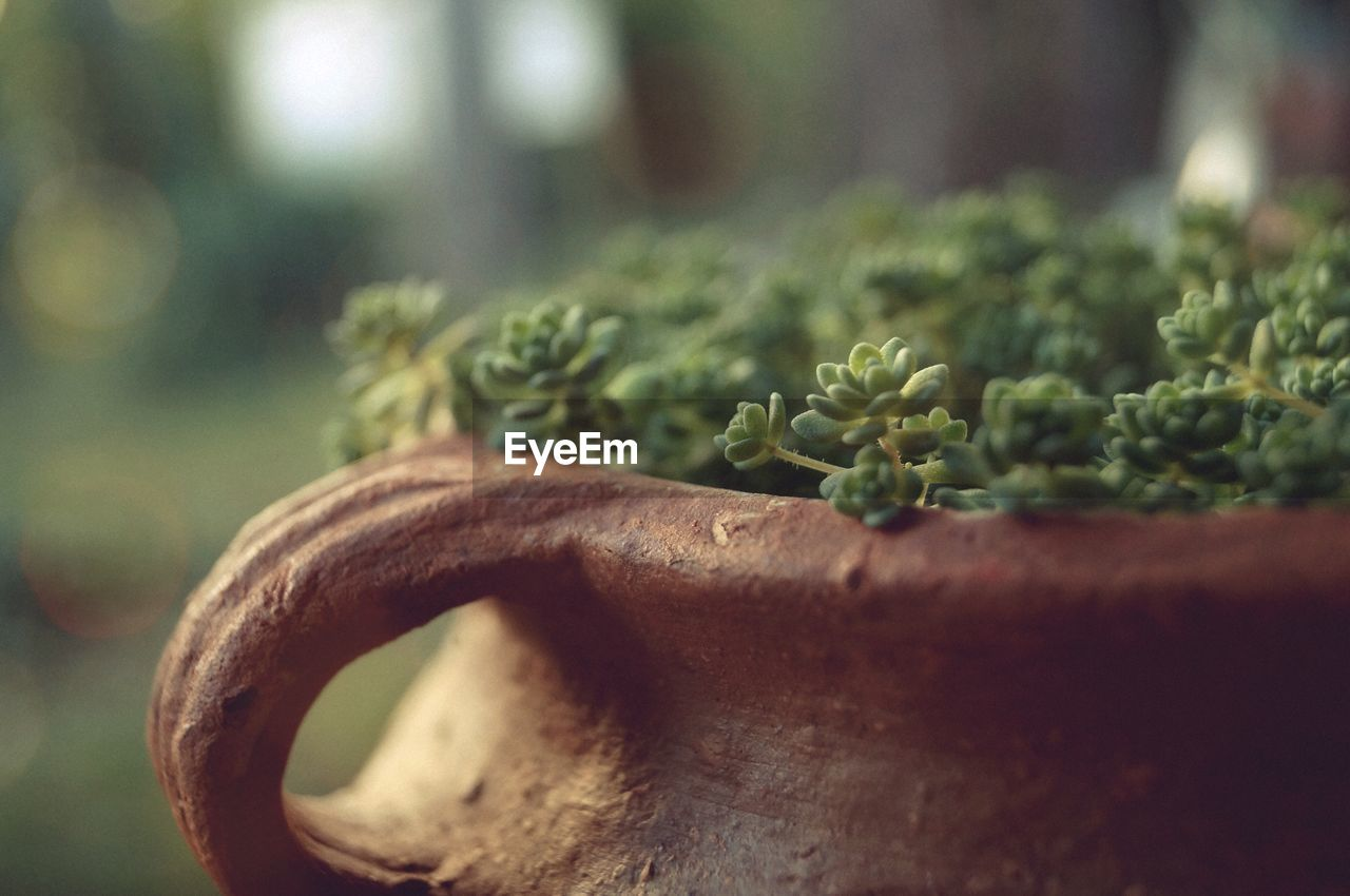 close-up, green color, selective focus, no people, food and drink, plant, focus on foreground, food, growth, wellbeing, day, plant part, vegetable, freshness, still life, leaf, healthy eating, indoors, metal, herb
