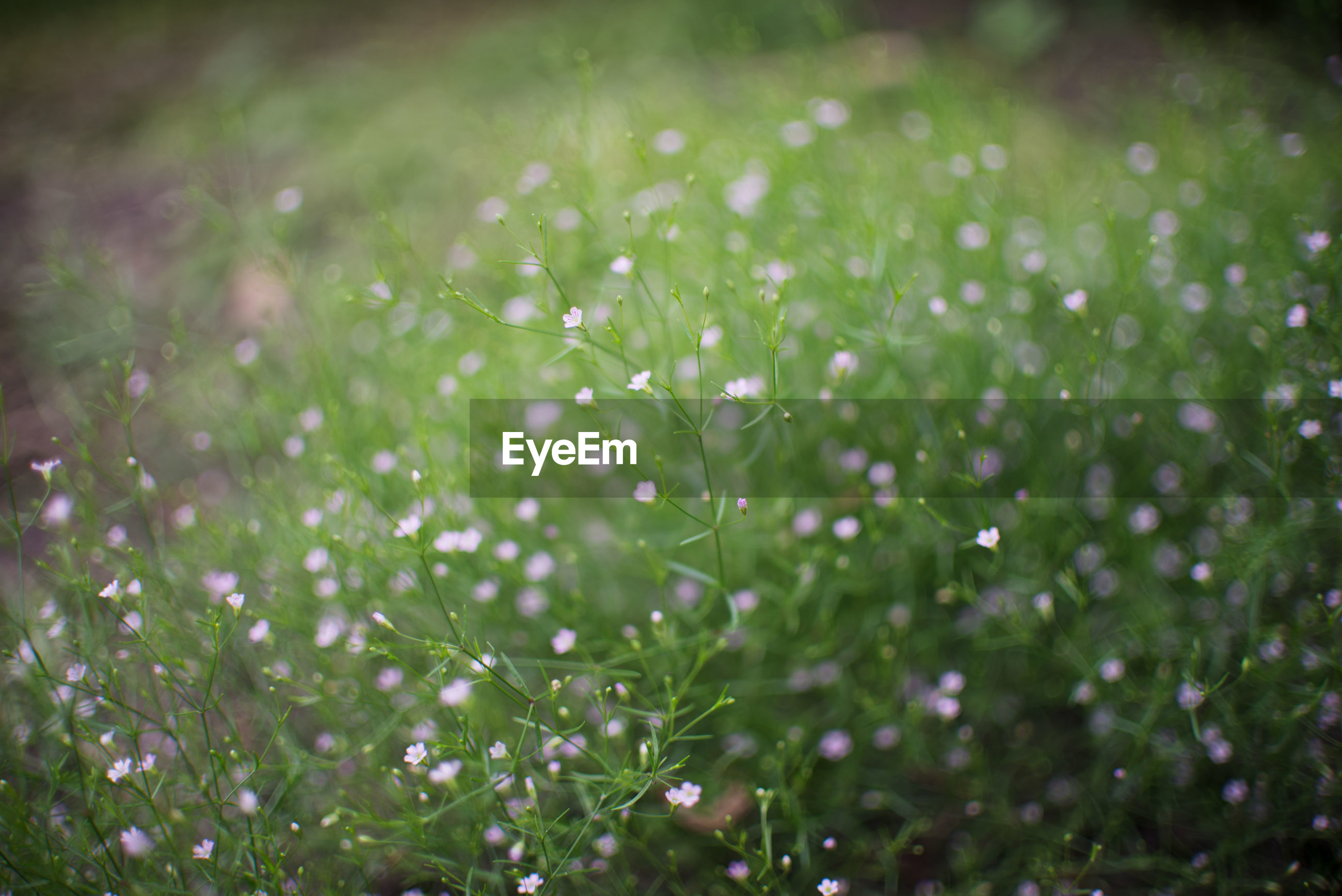 plant, green, beauty in nature, nature, freshness, grass, flower, macro photography, flowering plant, growth, drop, moisture, leaf, wet, dew, field, no people, selective focus, lawn, fragility, environment, land, water, springtime, meadow, close-up, outdoors, plain, summer, sunlight, backgrounds, tranquility, day, rain, landscape