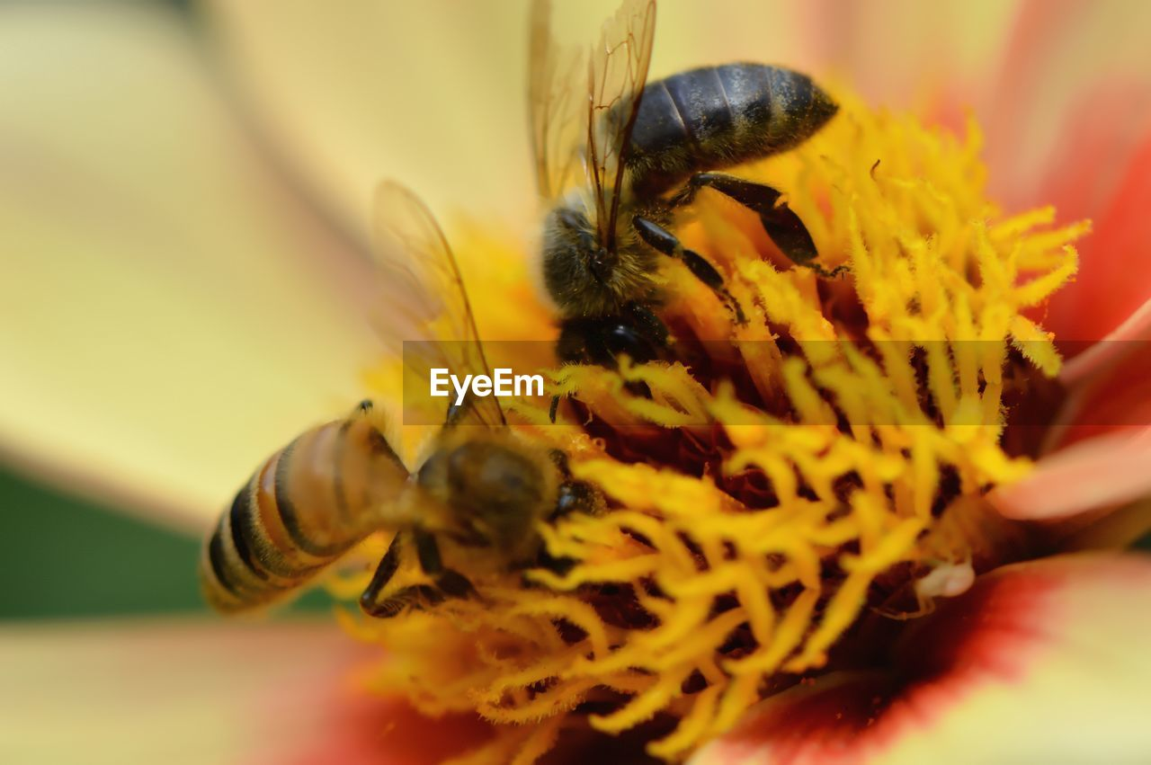 insect, animals in the wild, animal themes, one animal, flower, animal wildlife, bee, honey bee, close-up, selective focus, nature, beauty in nature, no people, outdoors, fragility, yellow, freshness, day, pollination, flower head