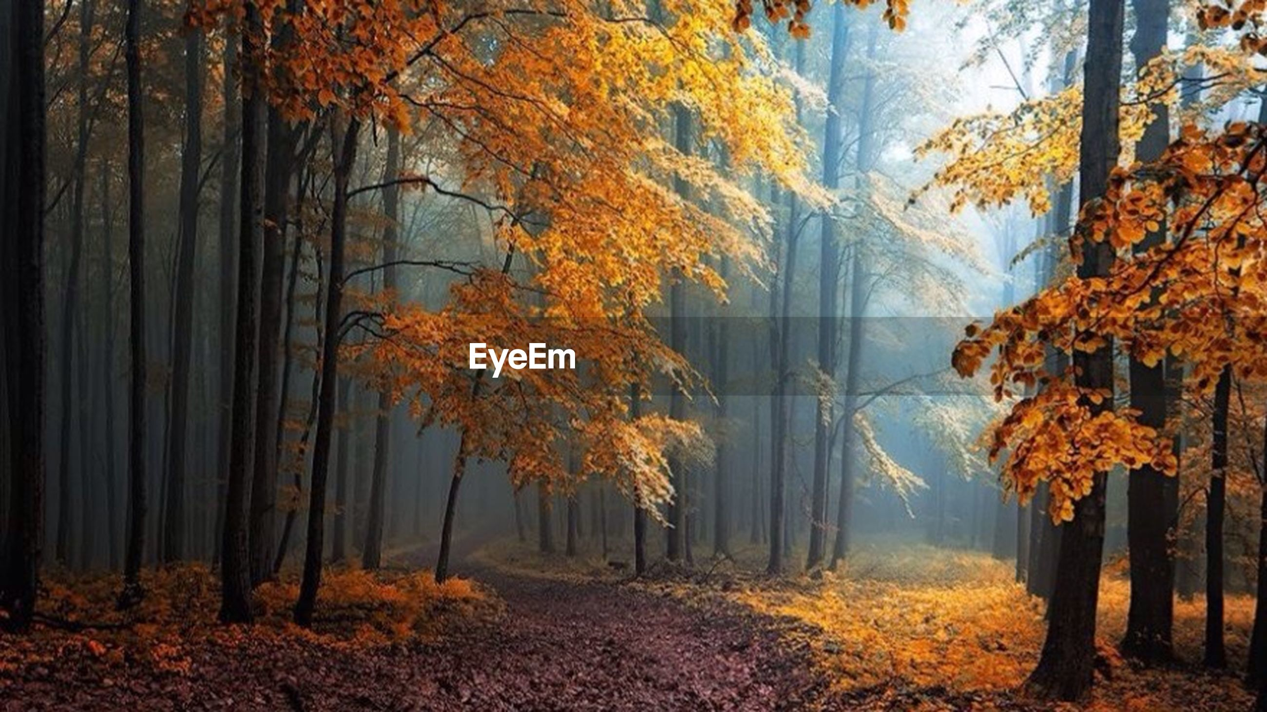 tree, autumn, change, season, tranquility, orange color, beauty in nature, nature, tranquil scene, scenics, tree trunk, forest, growth, woodland, branch, non-urban scene, landscape, idyllic, outdoors, day