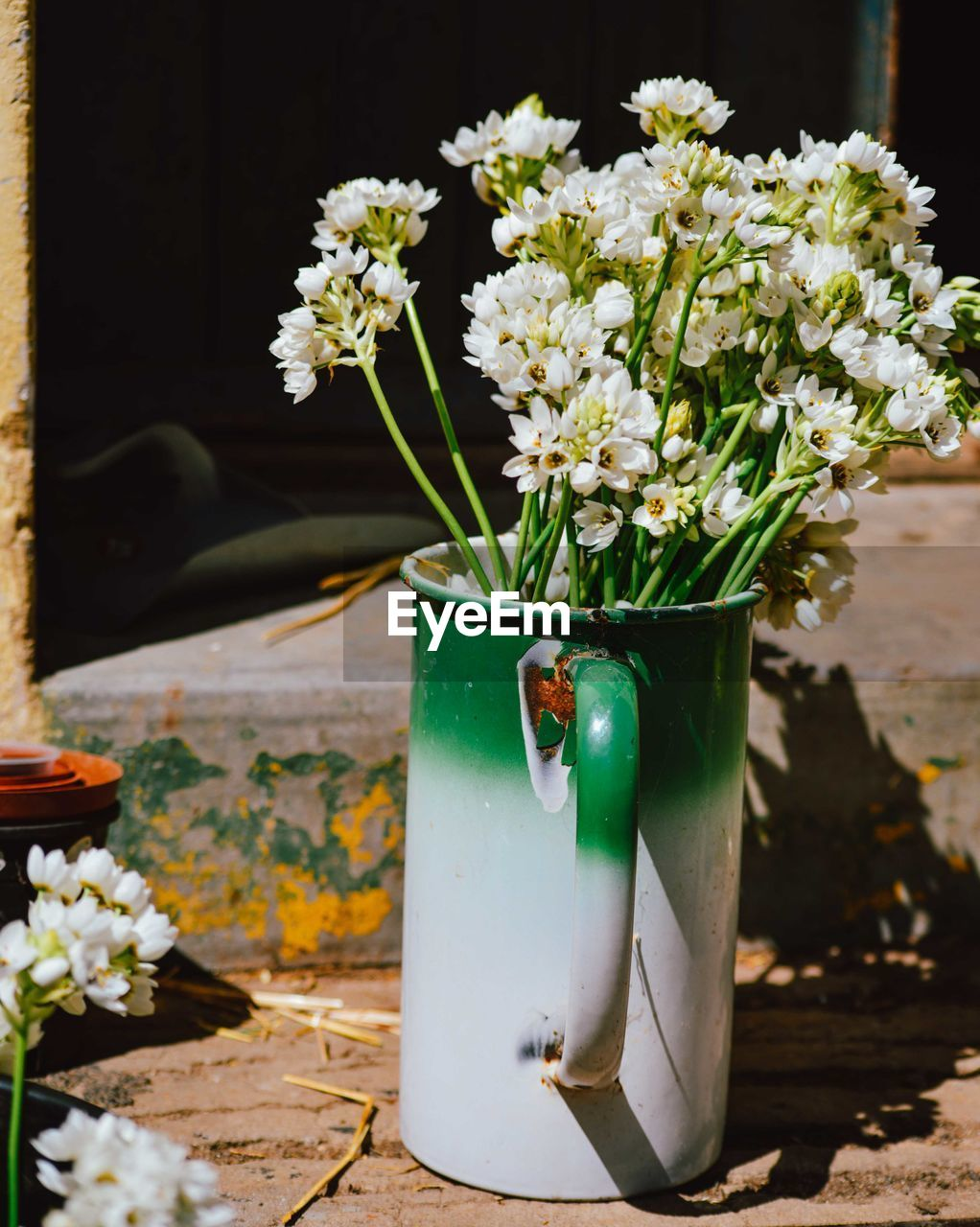 Low Angle View Of Flowers In Jug