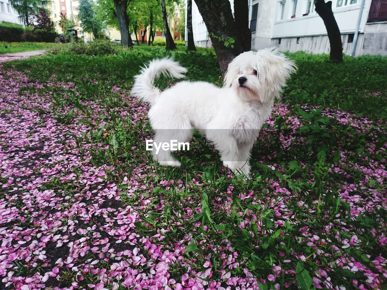 flower, dog, pets, domestic animals, one animal, animal themes, white color, nature, no people, growth, day, outdoors, mammal, beauty in nature, close-up