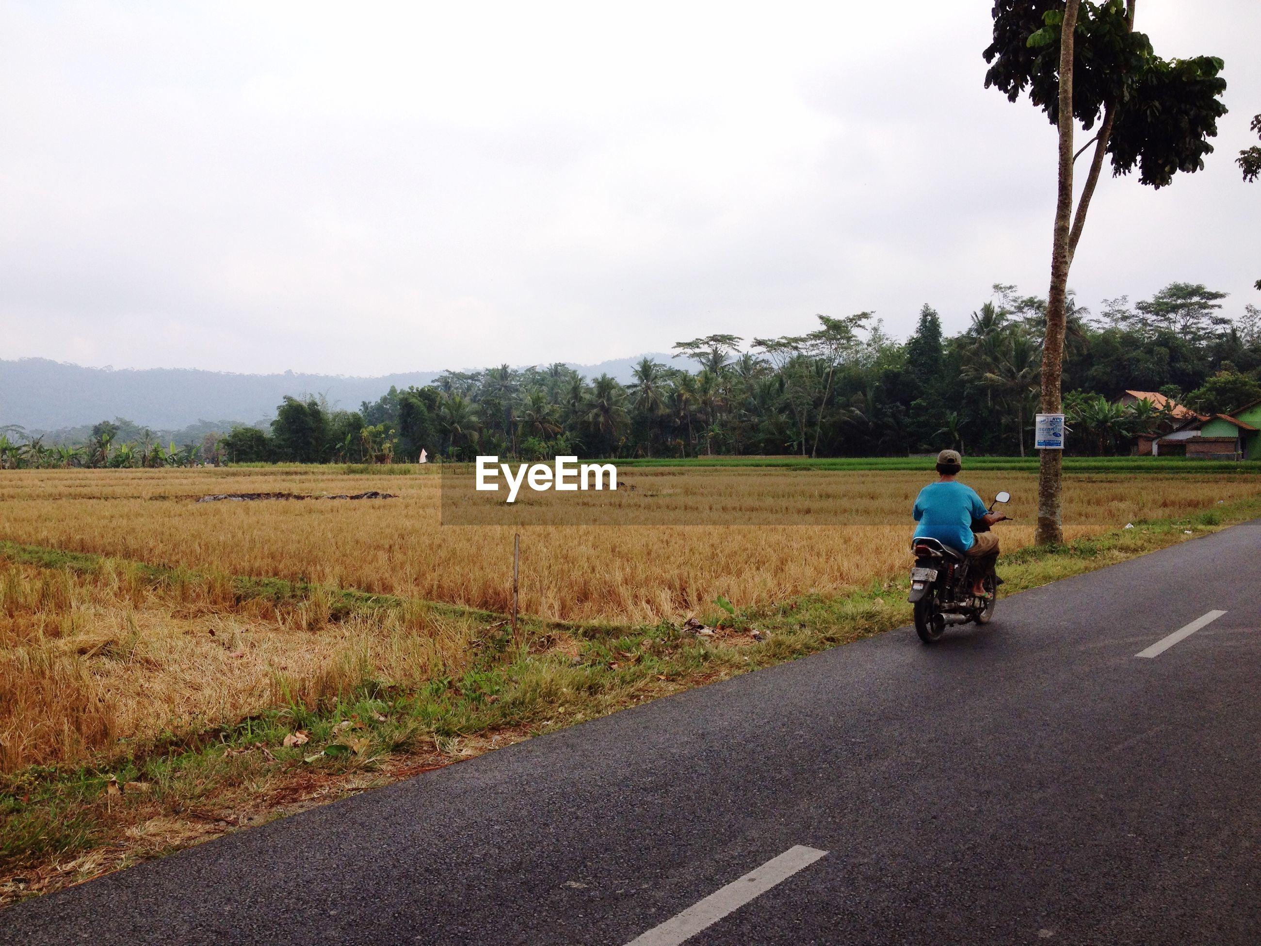 Rear view of man riding motor scooter on road by grassy field against sky