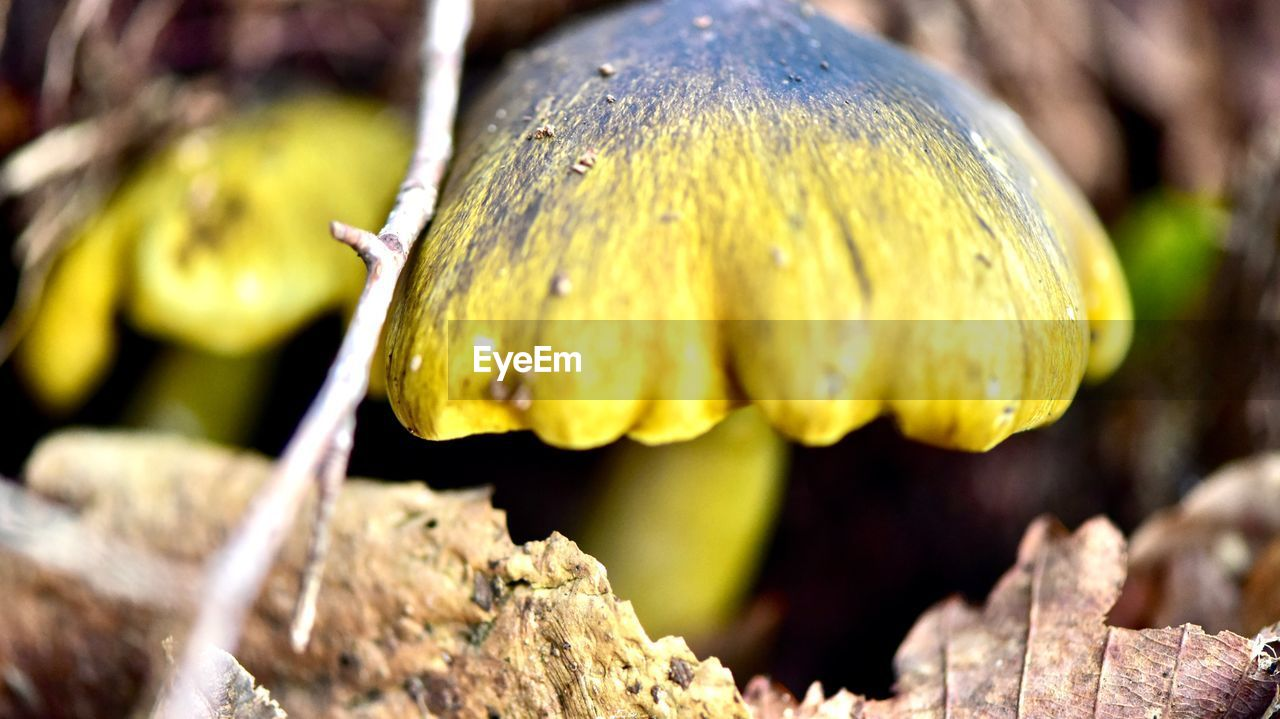 close-up, growth, plant, yellow, beauty in nature, no people, vulnerability, focus on foreground, day, fragility, flower, freshness, nature, flowering plant, selective focus, flower head, petal, inflorescence, fungus, food, outdoors, lichen