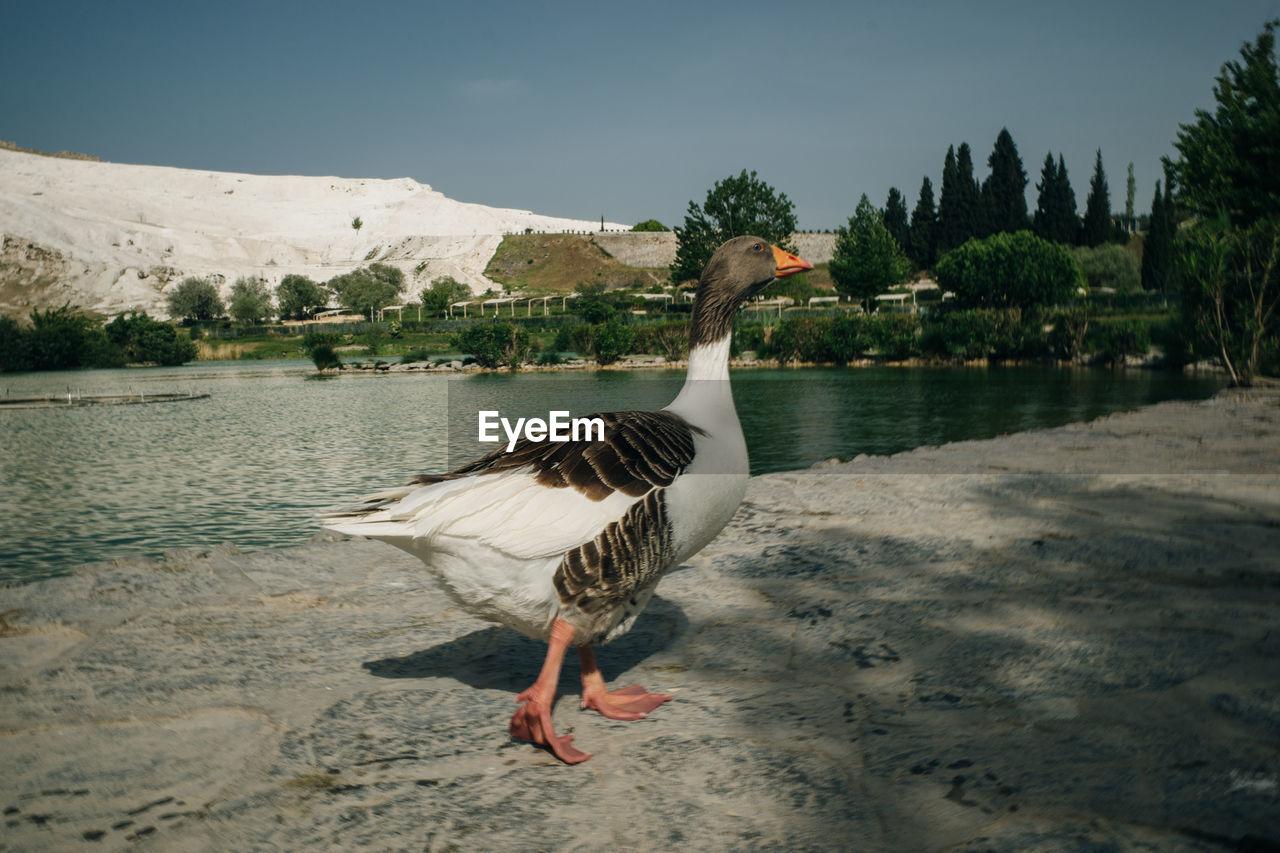 VIEW OF BIRD ON LAKE