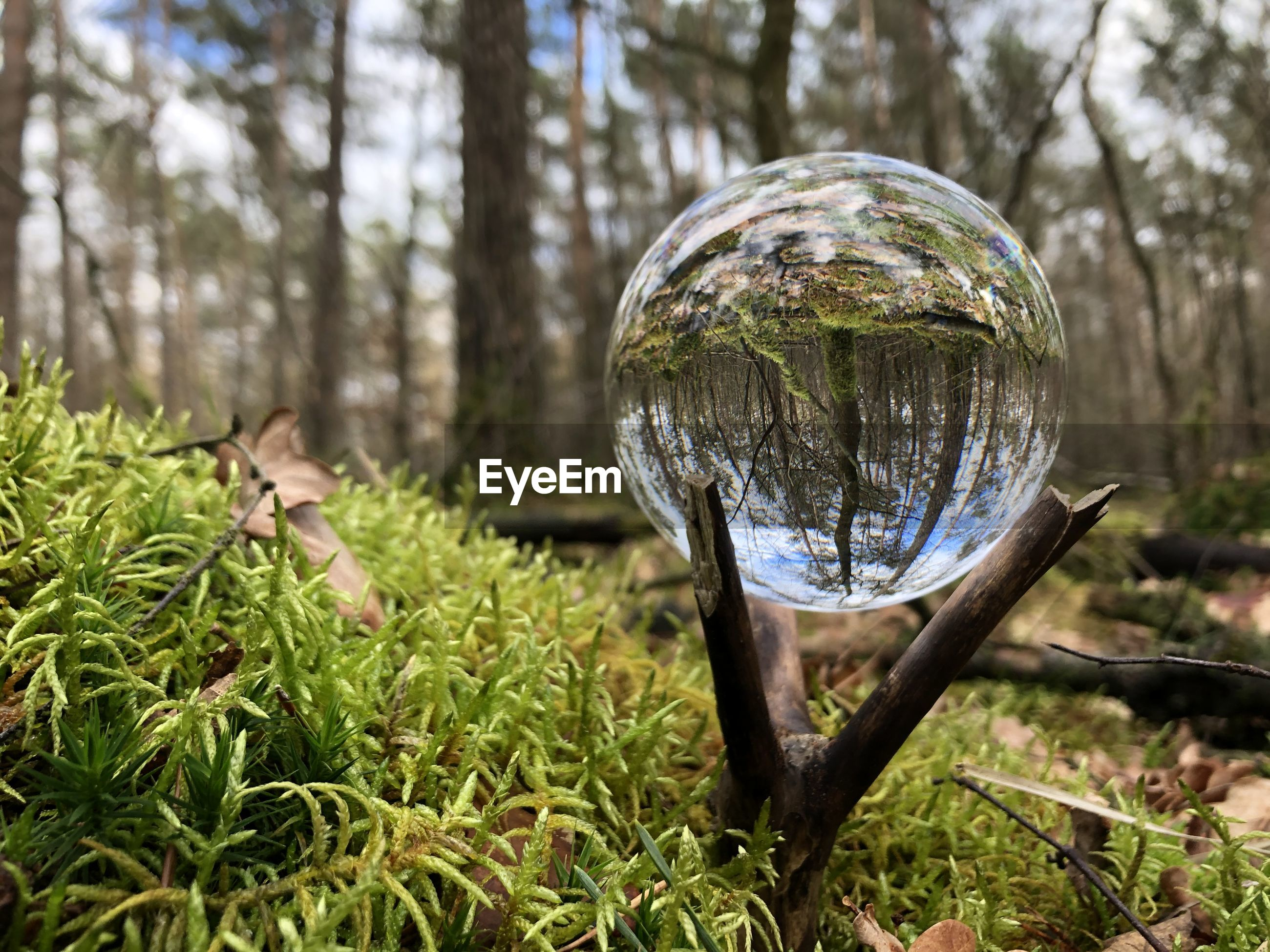 CLOSE-UP OF GLASS BALL ON FIELD IN FOREST